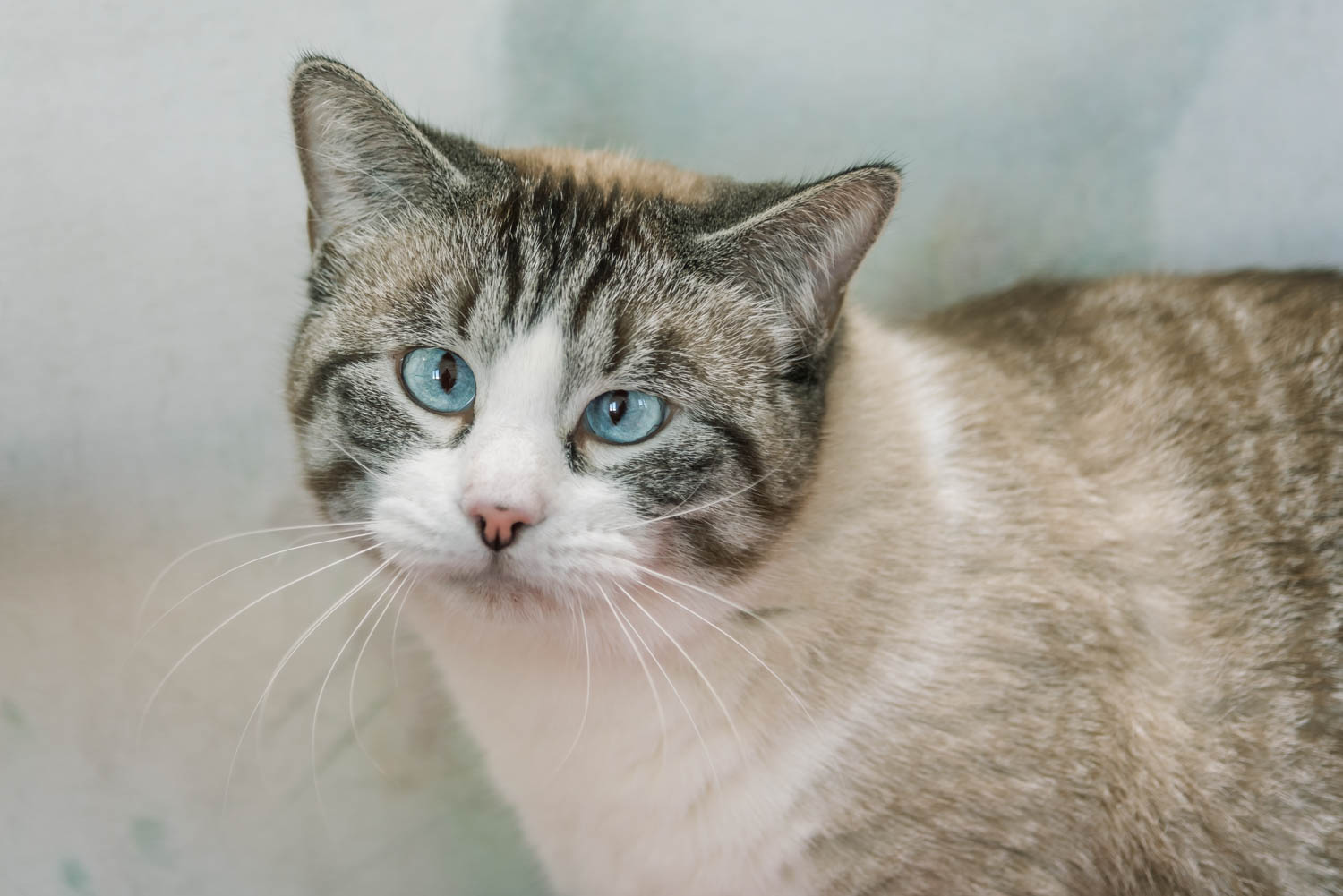 Lisa_Witherley_Happy_Cat_Sanctuary_rescue_cats (11 of 24).jpg