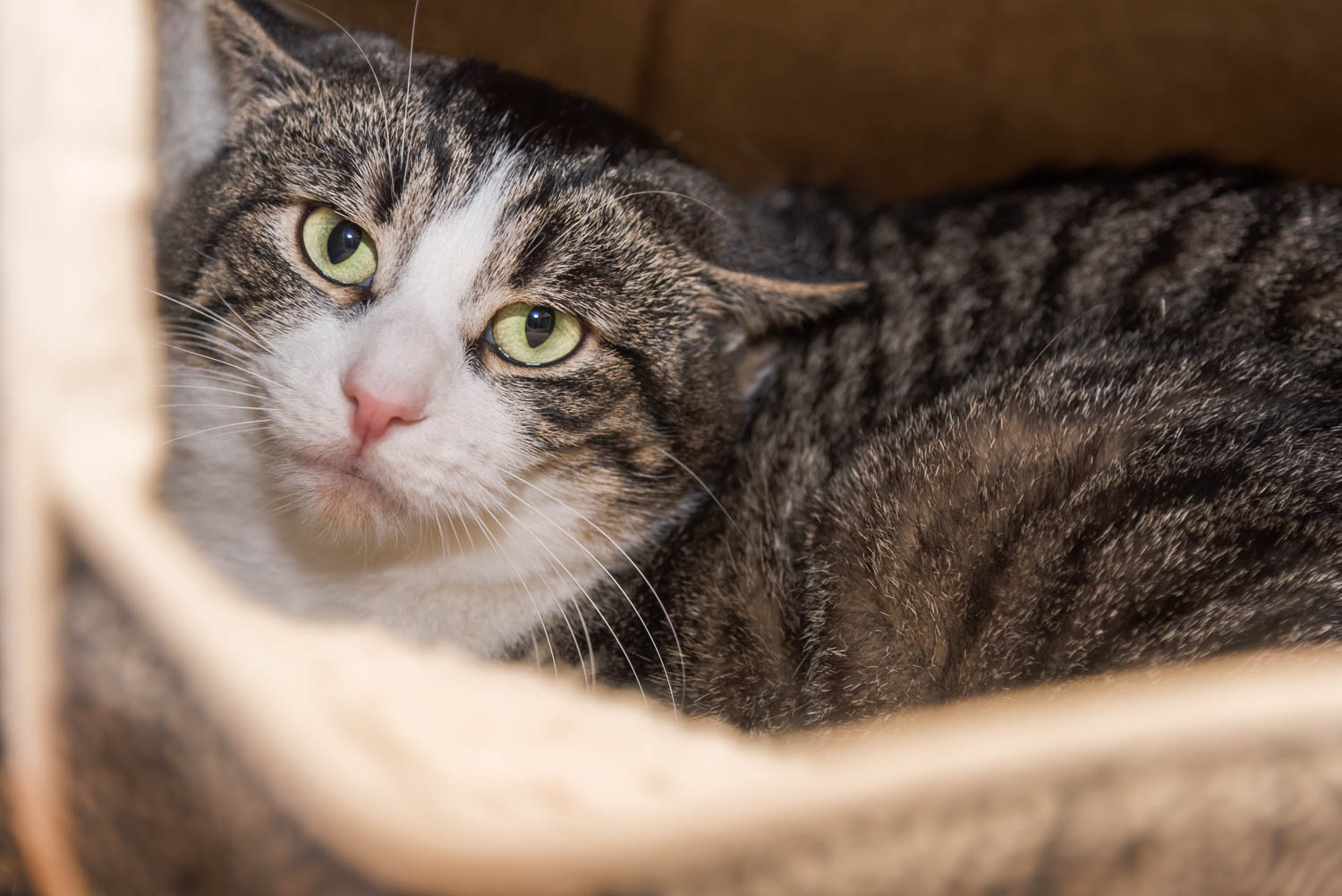 Lisa_Witherley_Happy_Cat_Sanctuary_rescue_cats (14 of 24).jpg