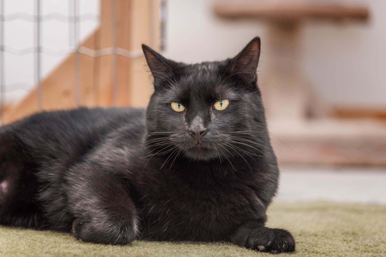 Lisa_Witherley_Happy_Cat_Sanctuary_rescue_cats (17 of 24).jpg