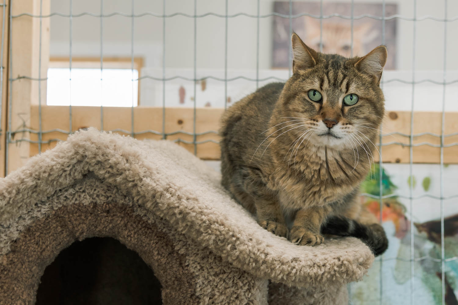 Lisa_Witherley_Happy_Cat_Sanctuary_rescue_cats (19 of 24).jpg