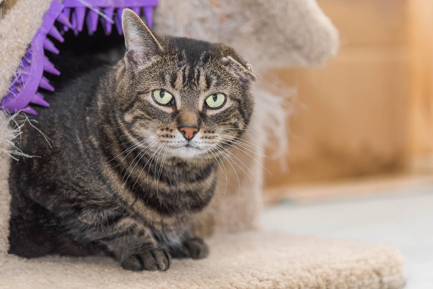 Lisa_Witherley_Happy_Cat_Sanctuary_rescue_cats (21 of 24).jpg