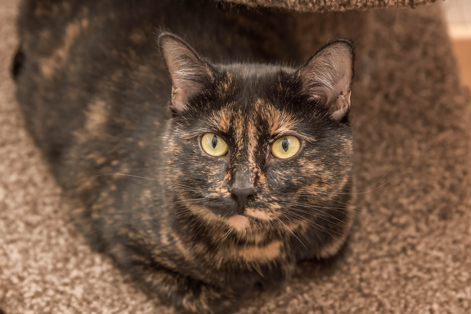 Lisa_Witherley_Happy_Cat_Sanctuary_rescue_cats (24 of 24).jpg