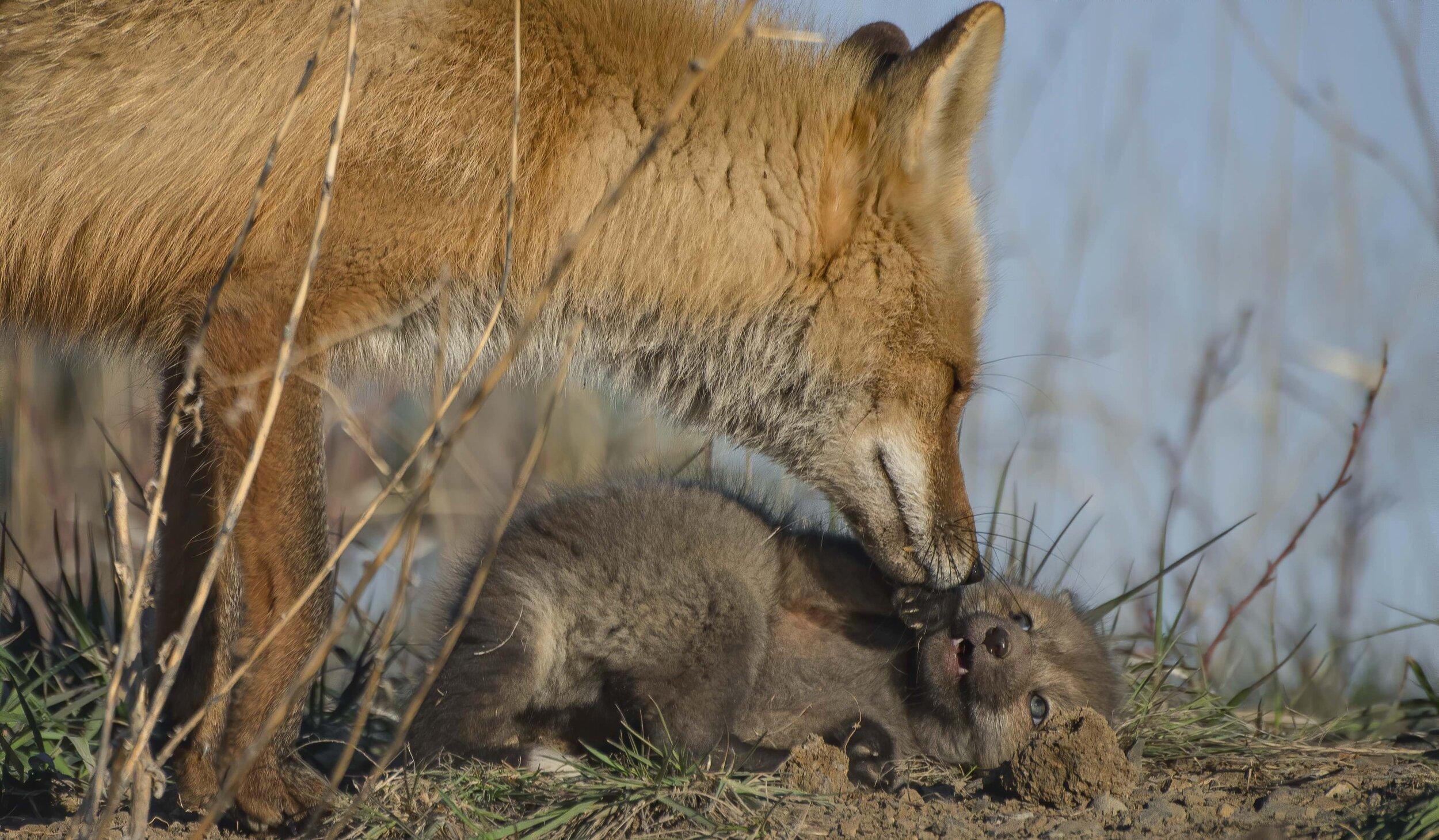 foxess.jpg