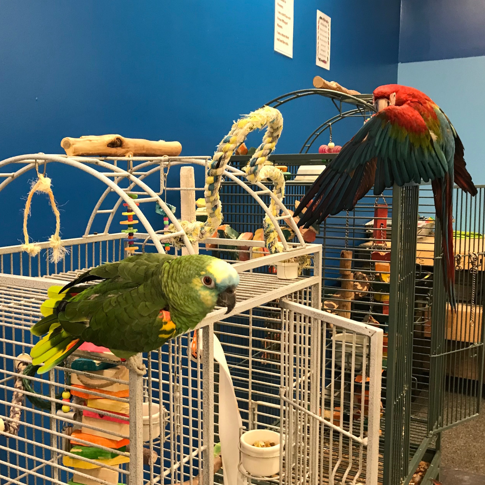 Parrots 'n Stuff - LD reveals her background with birds (and her bird voice) for the podcast.