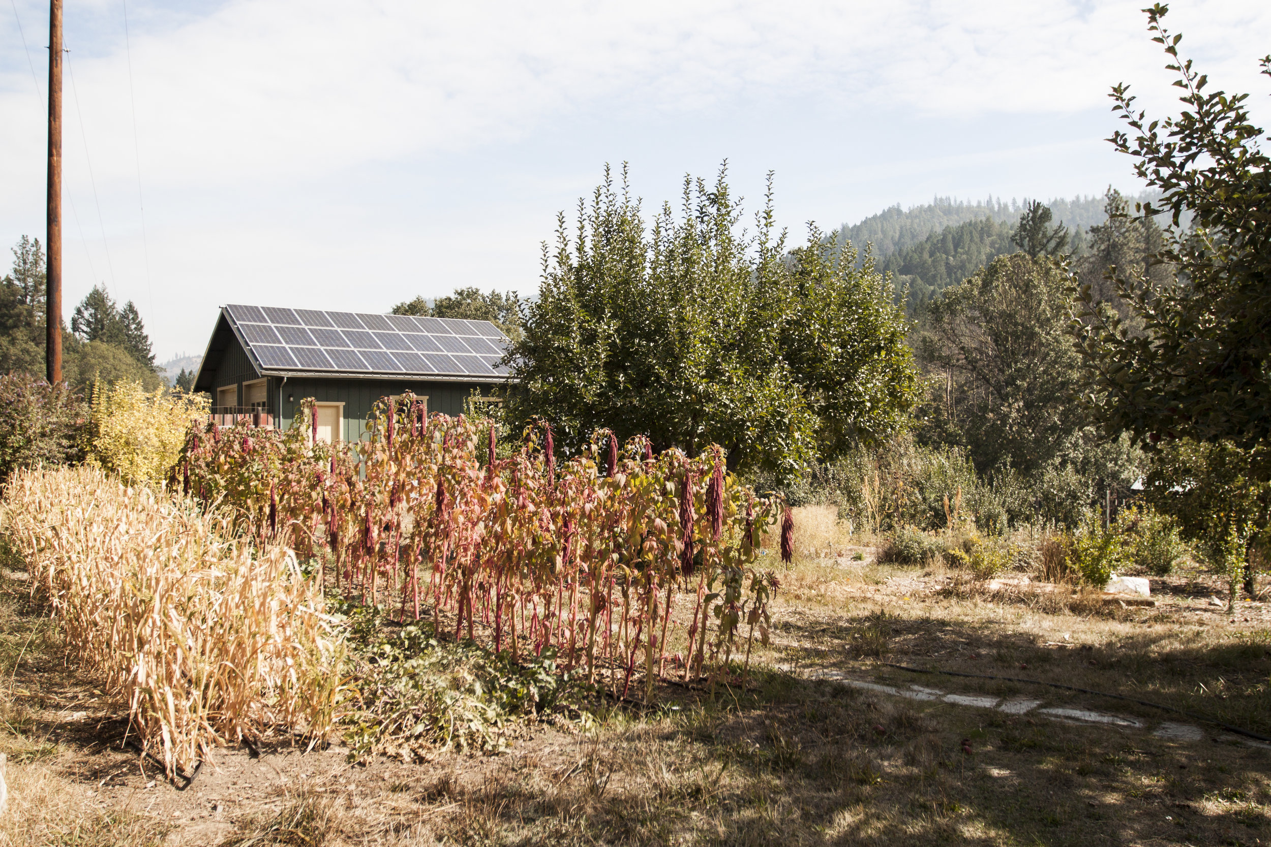 Diverse blocks of plants at Ridgeline Meadows Farm in Applegate, Oregon.