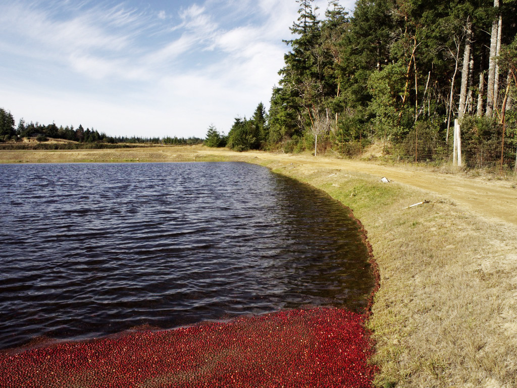 Hauetersbogs is located on the mild Southern Oregon coast.