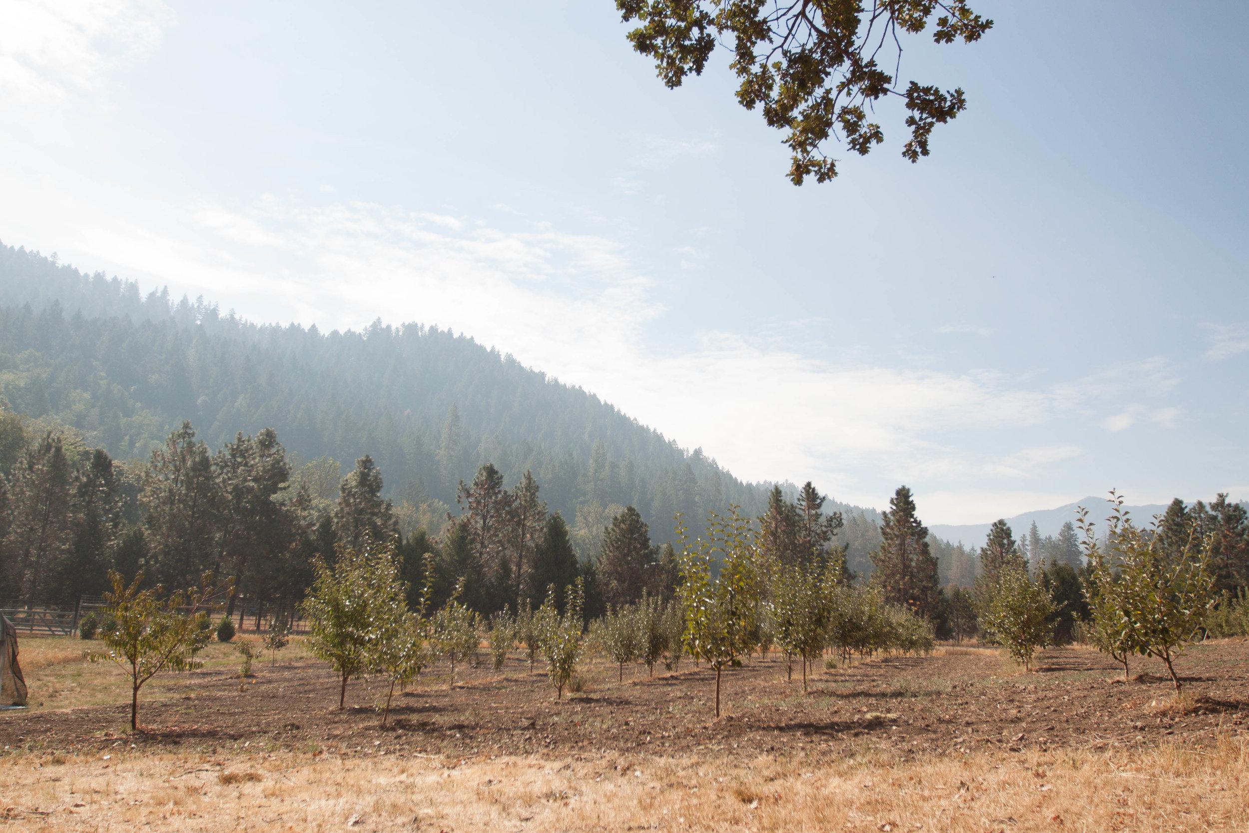 Ridgefield Meadows Farm in Oregon [photo by: Olivia Guethling]