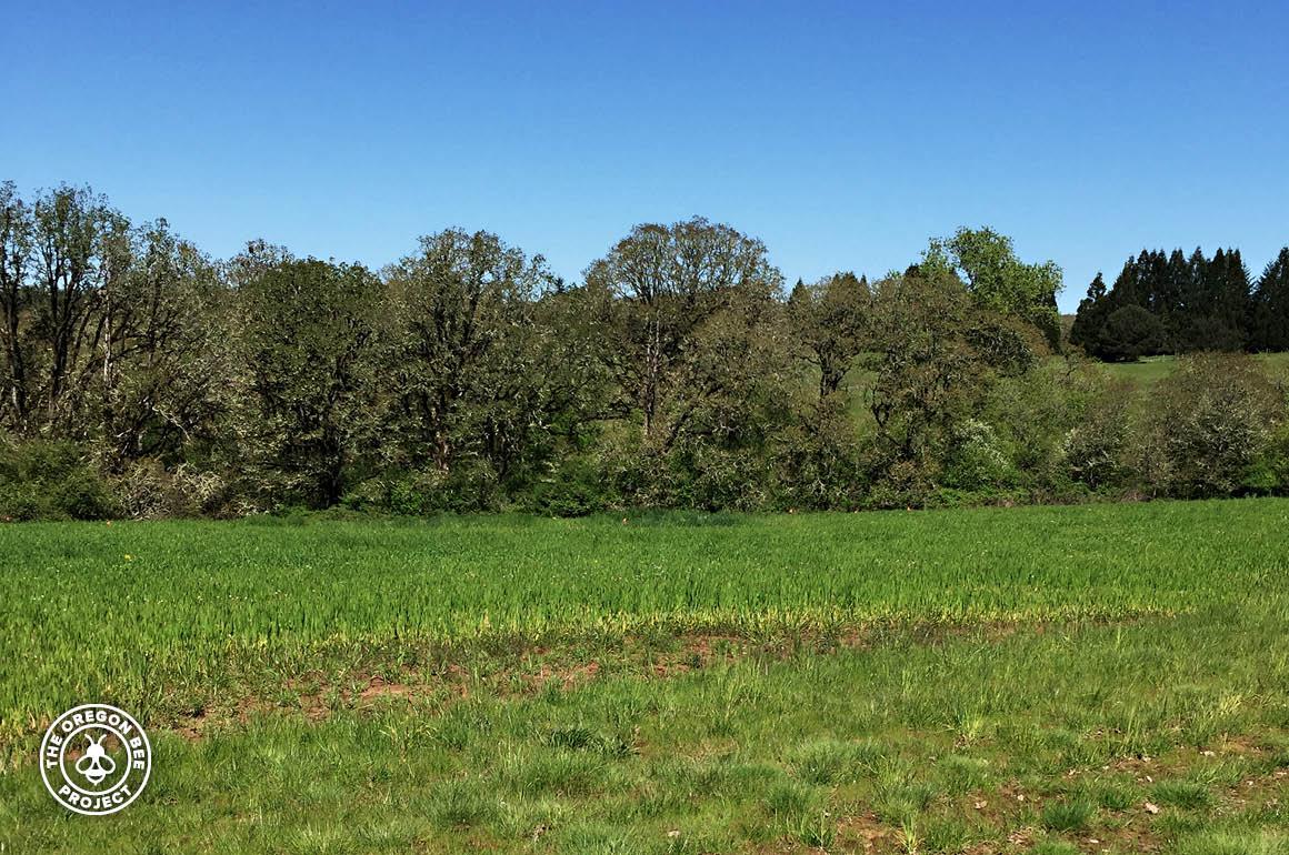 Seed crop intermixed with Oak Savannah habitat.