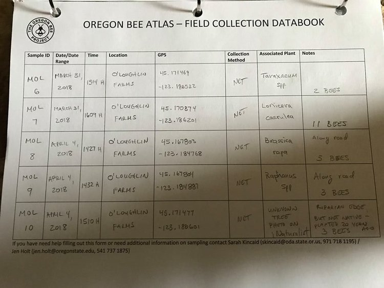 Here is a copy of Michael O'Loughlin's field notebook. For those of you not working on iNaturalist, email a scan or picture of your notebook to Andony and he will use this to produce your labels.