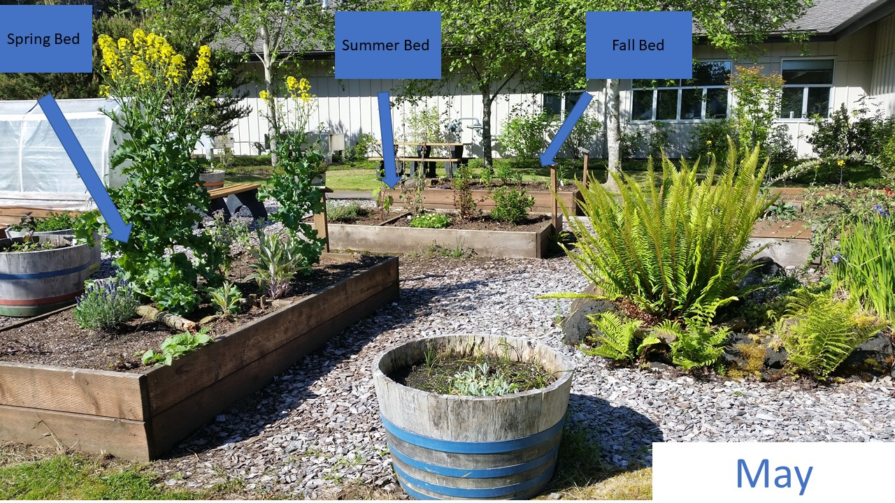 Mid-May – The spring blooming bed is on the left forefront. The tall yellow flowers, that are actually kale plants planted the previous year, were a hit with the bumblebees! In the center of the image are the summer and then fall blooming gardens.