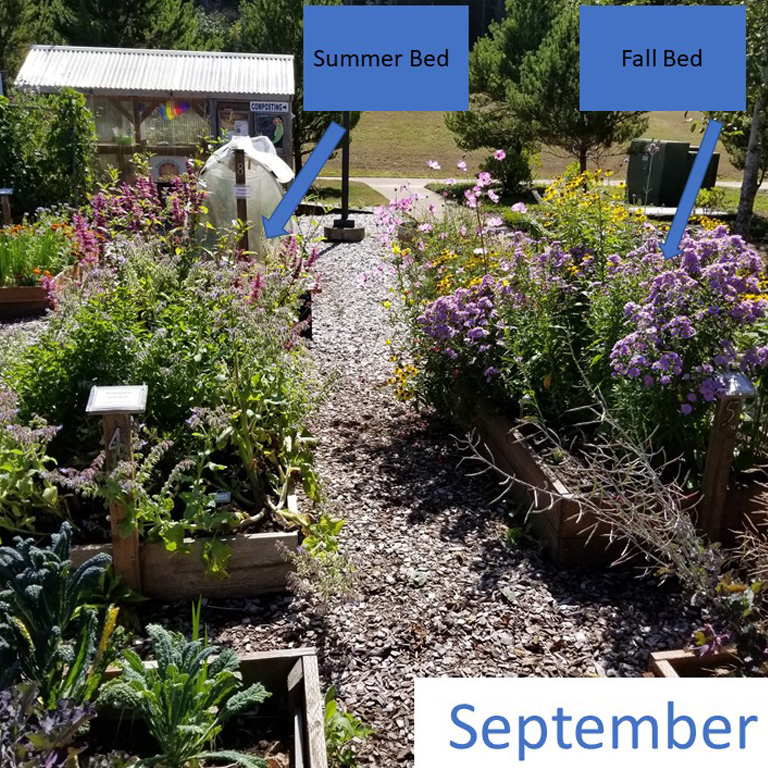 Mid-September - The sneezeweed and cosmos were very popular until the asters came into bloom and stole the show! These asters are the plants boasting tons of smaller lavender-pink flowers.Goldenrod was another aster the bees loved while its two small flower clusters bloomed. The milkweed and hyssop were very young plants and did not bloom this year; we might plant them earlier next year.