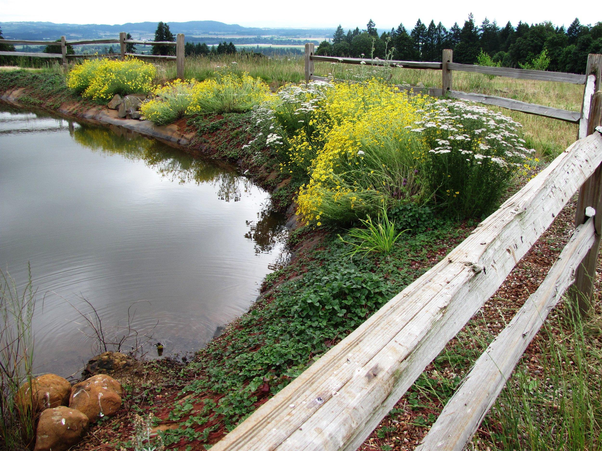 Part of the Winter Hill Estate devoted to pollinator habitat.