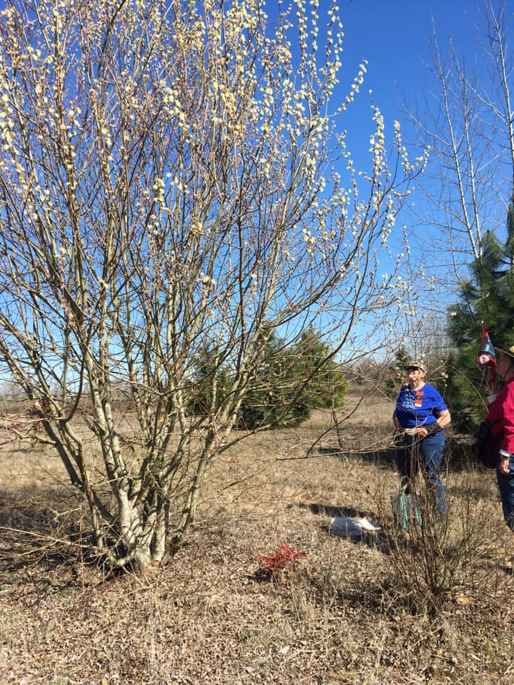"""Briana Lindh and some of the Salem Team went out collecting on March 17. Briana notes: """"Willow sampling in Salem! Most willows weren't ready - but the two open ones were buzzing""""."""