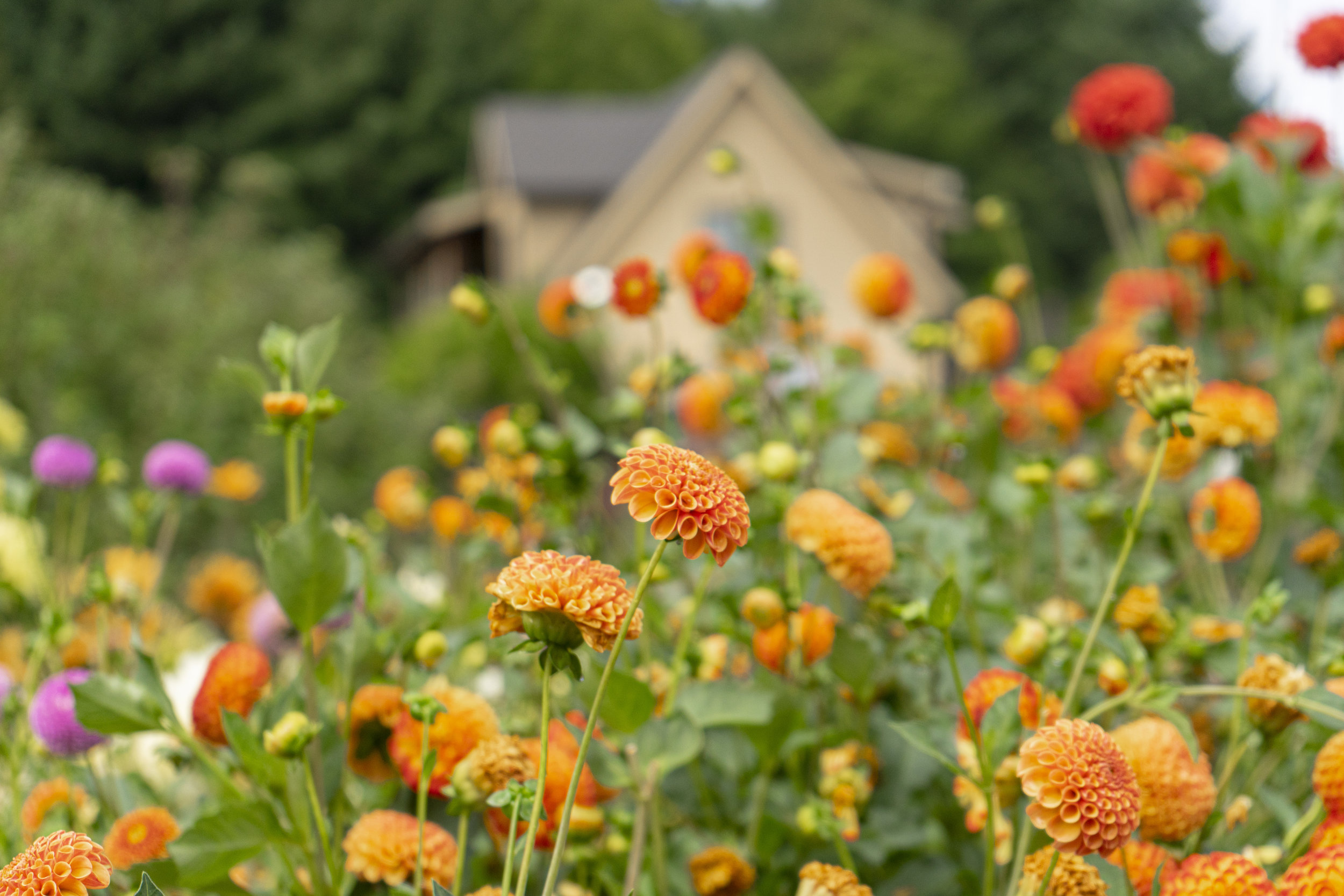 Gardens abound allow for a healthy variety of options all over the farm.