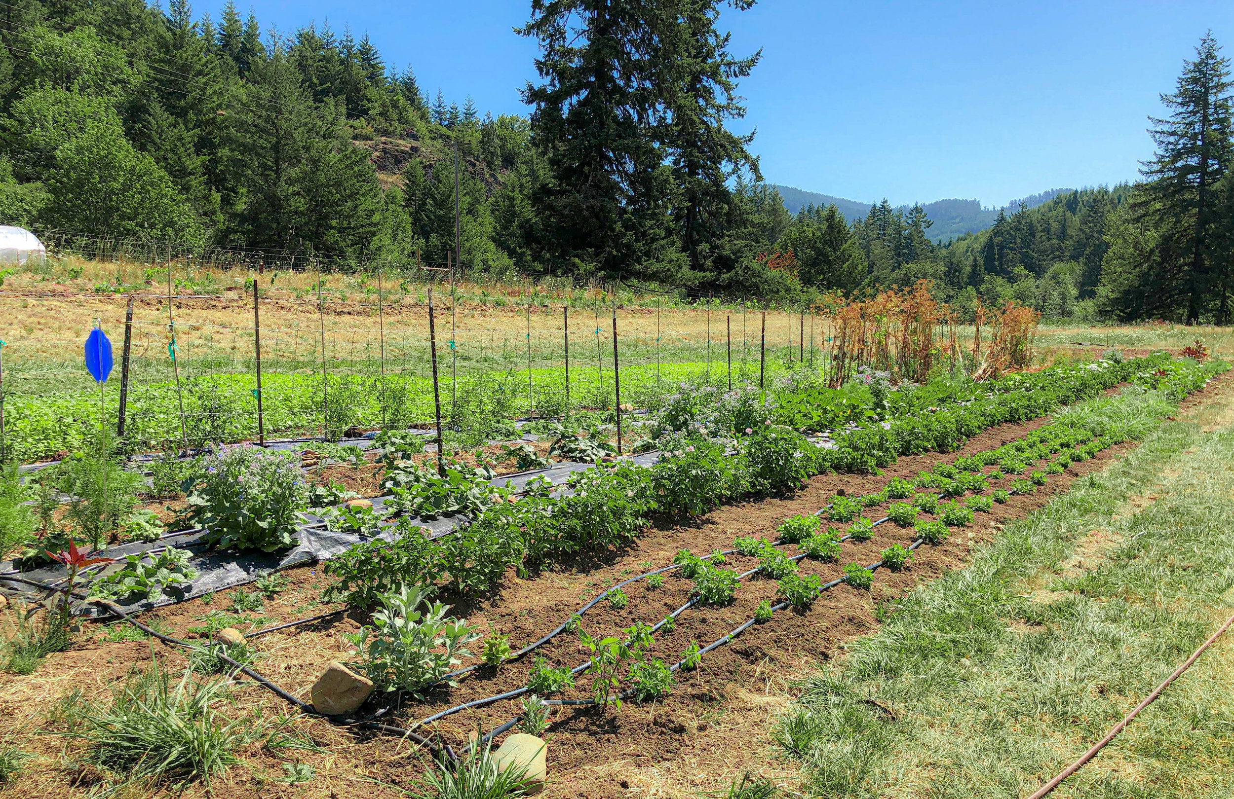 The plot pictured contains various herbs and vegetables.