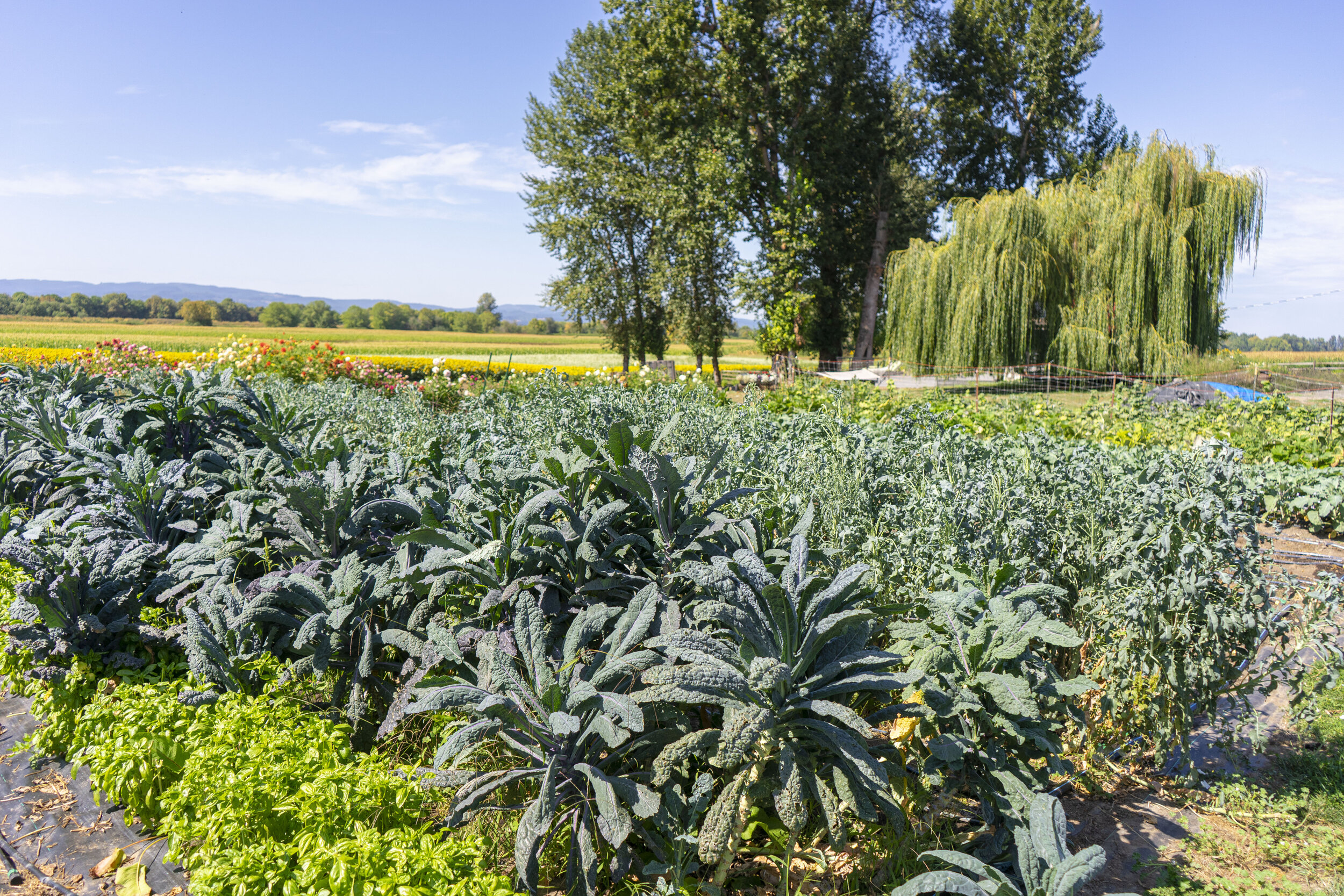 Basil, Kale, and various other crops are located throughout the farms nine acres