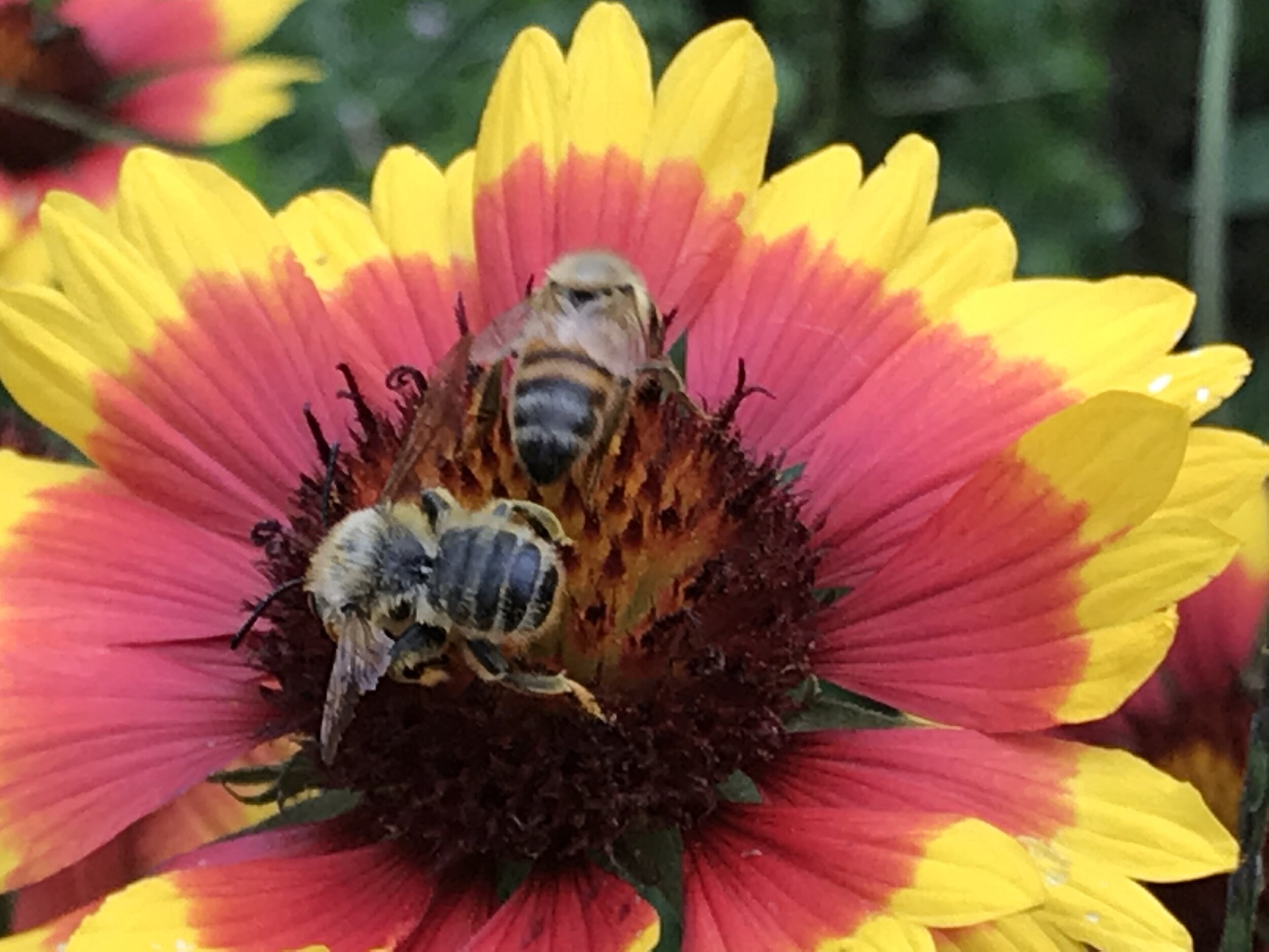 """Many people think """"What can bees do for us?"""" However, we ask, """"What can we do for them?"""""""