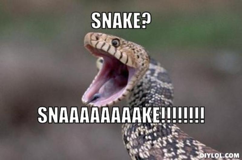 a-certain-surprised-snake-meme.jpg
