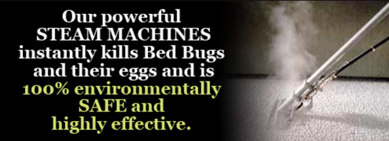 Leading bed bug exterminator Suffolk County NY