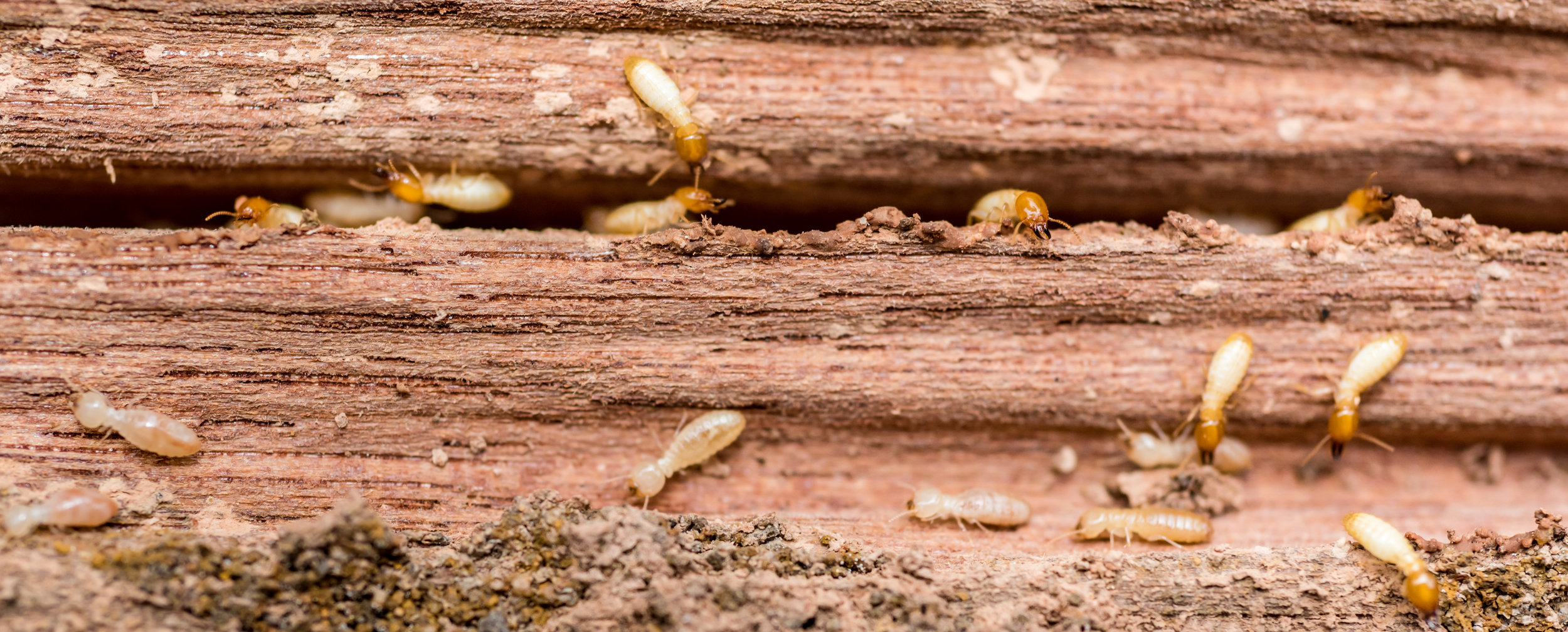 Get Rid of Termites in Your NYC Rental Property with Professional Termite Extermination Service