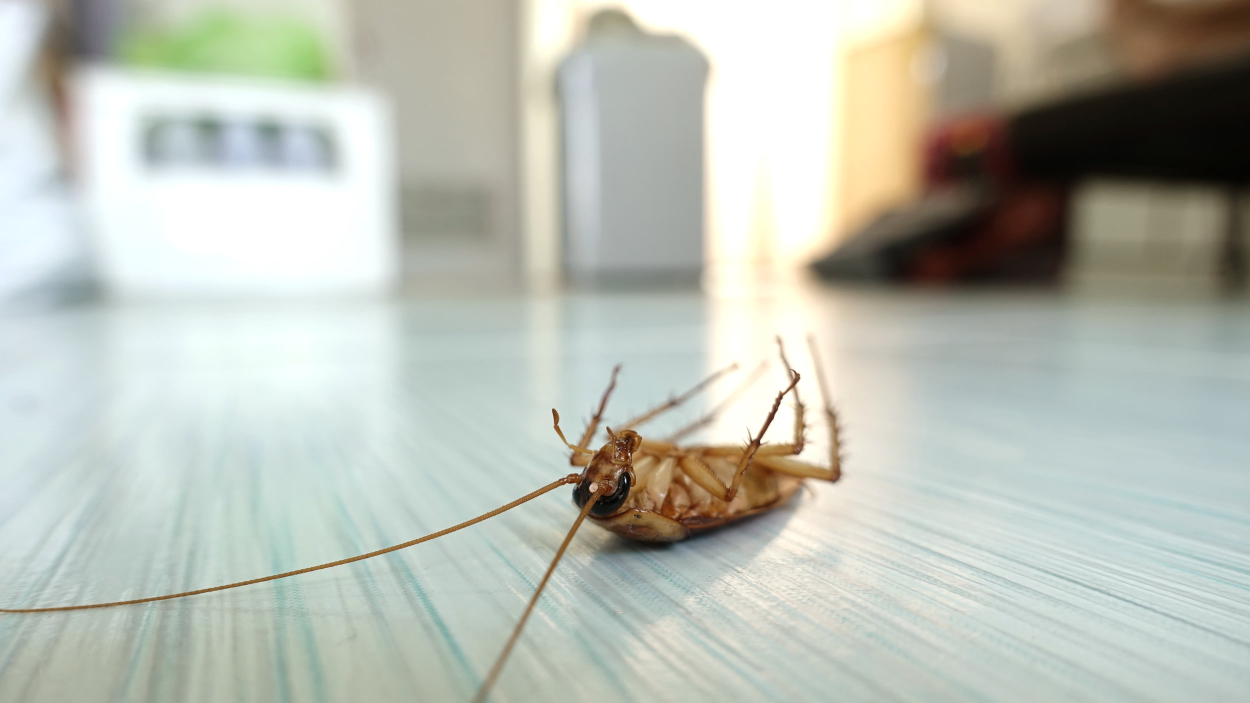 The Best Pest Control Checklist for Your Staten Island, NY, Home