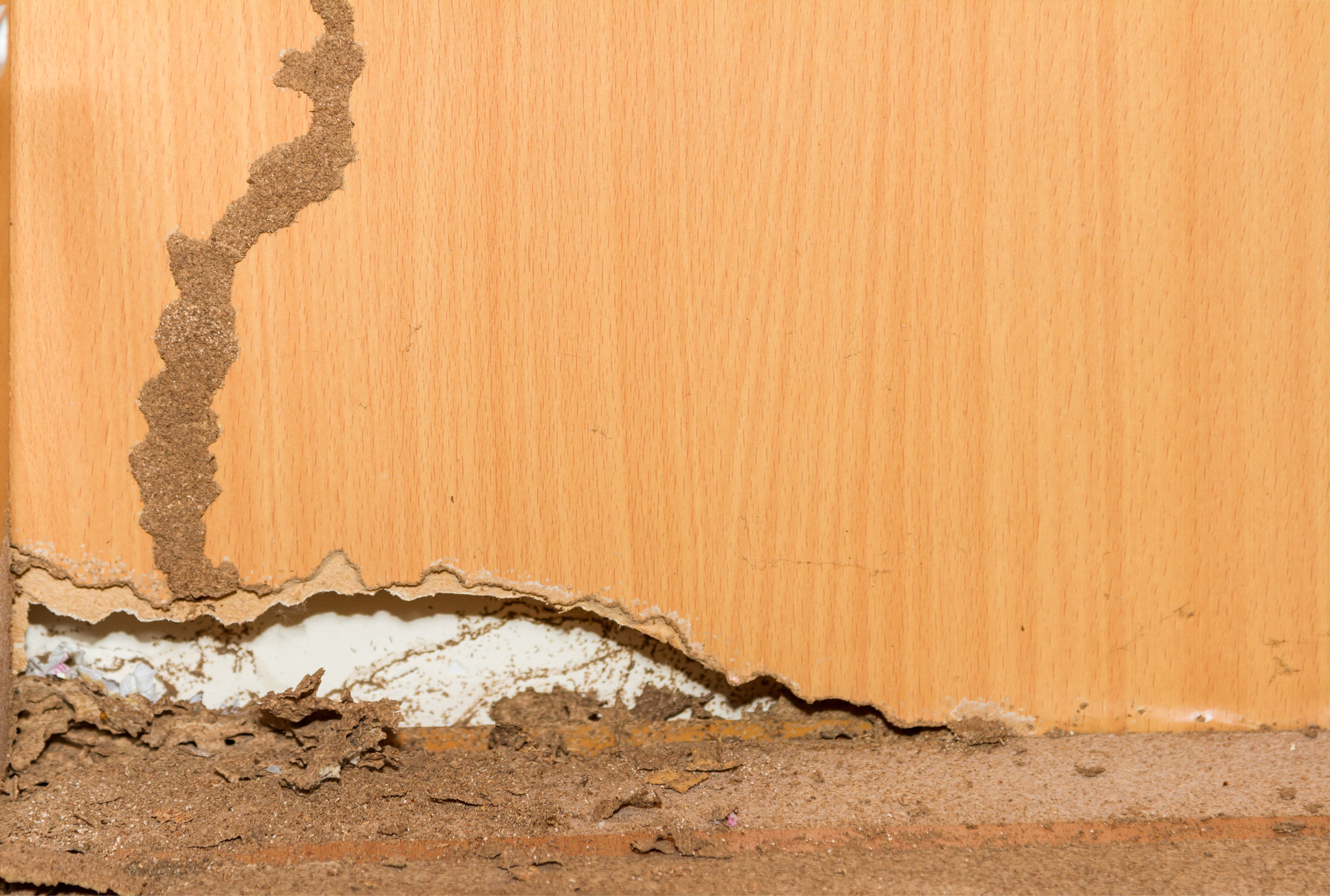 What Kind of Pesticides Does an Exterminator Use to Get Rid of Termites in Huntington, NY?