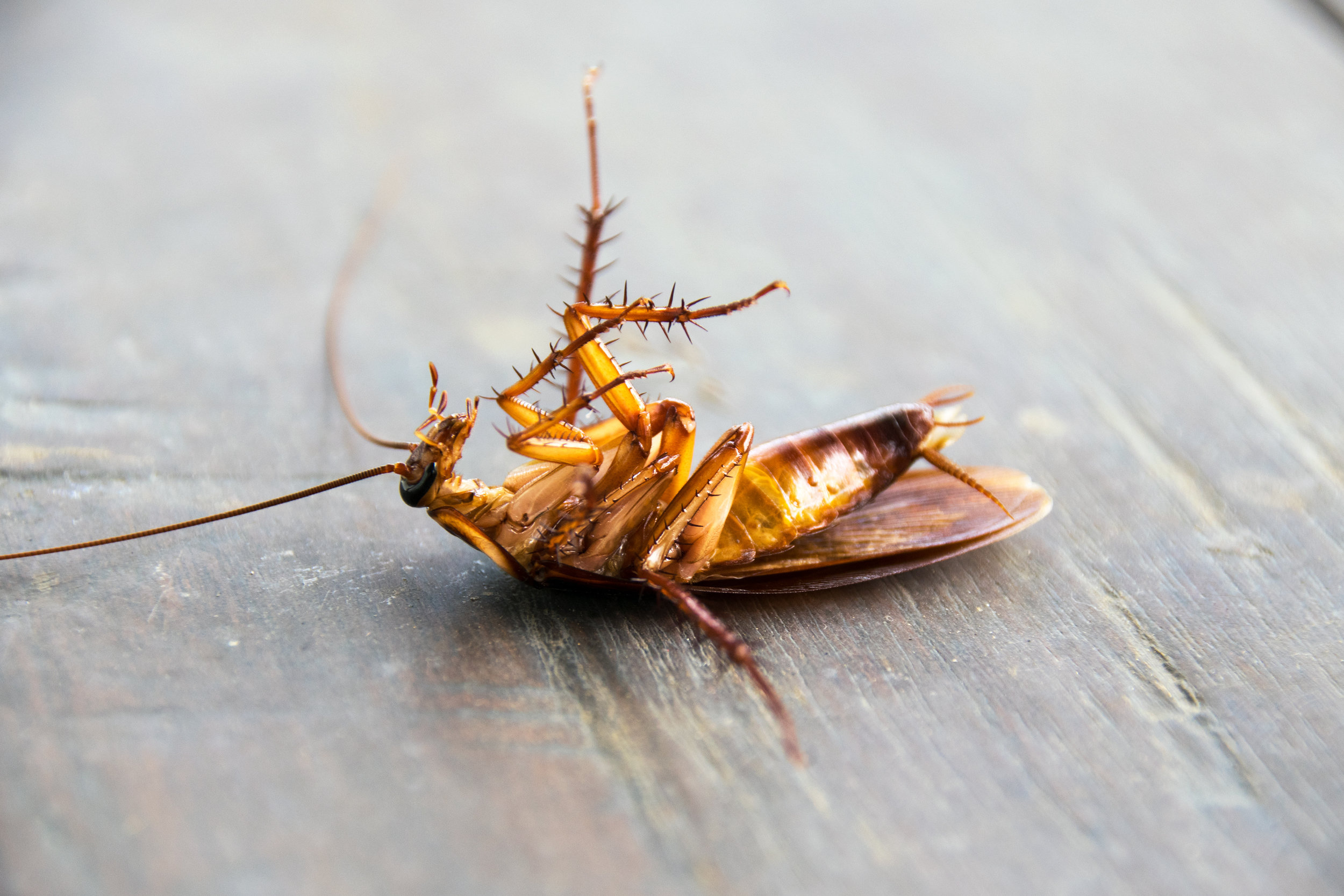 What Does a Commercial Pest Control Service Include in Brooklyn, NY?