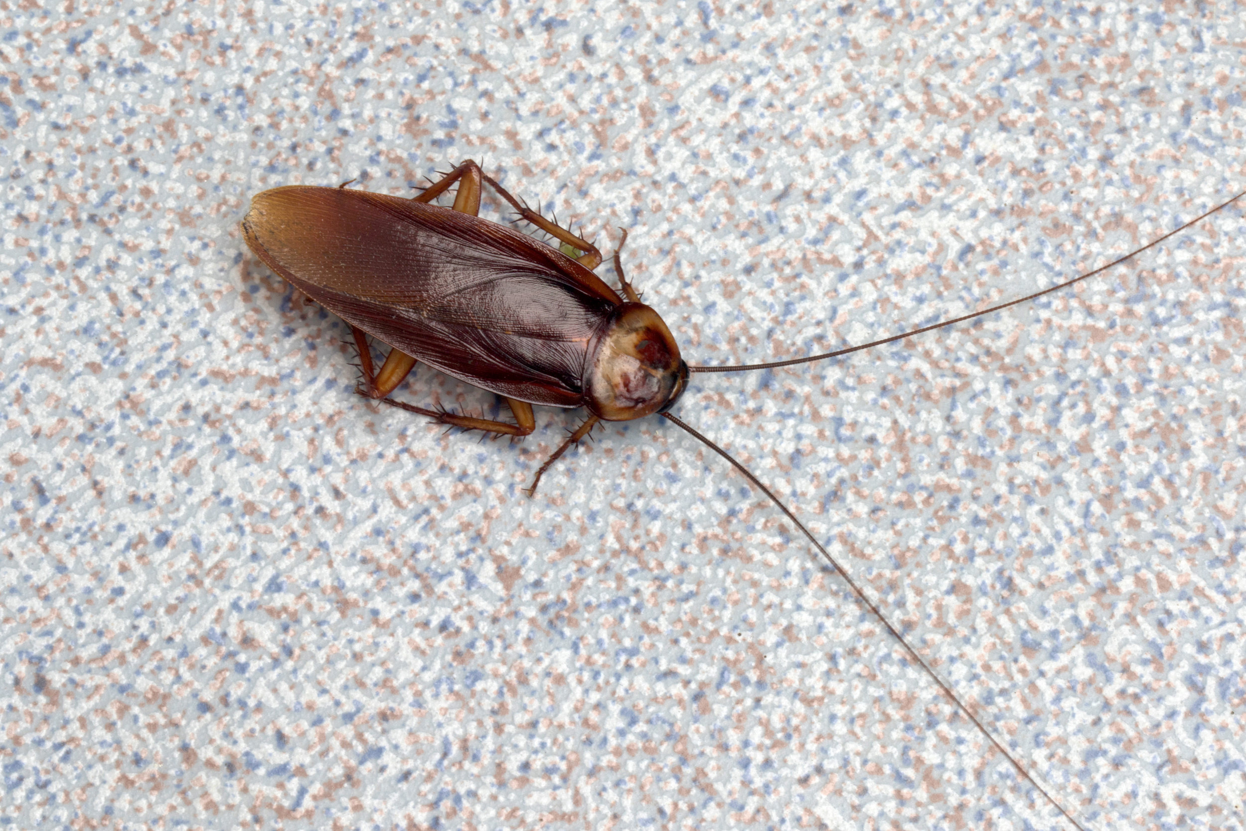 Hire an Exterminator to Get Rid of Roaches in Huntington, NY
