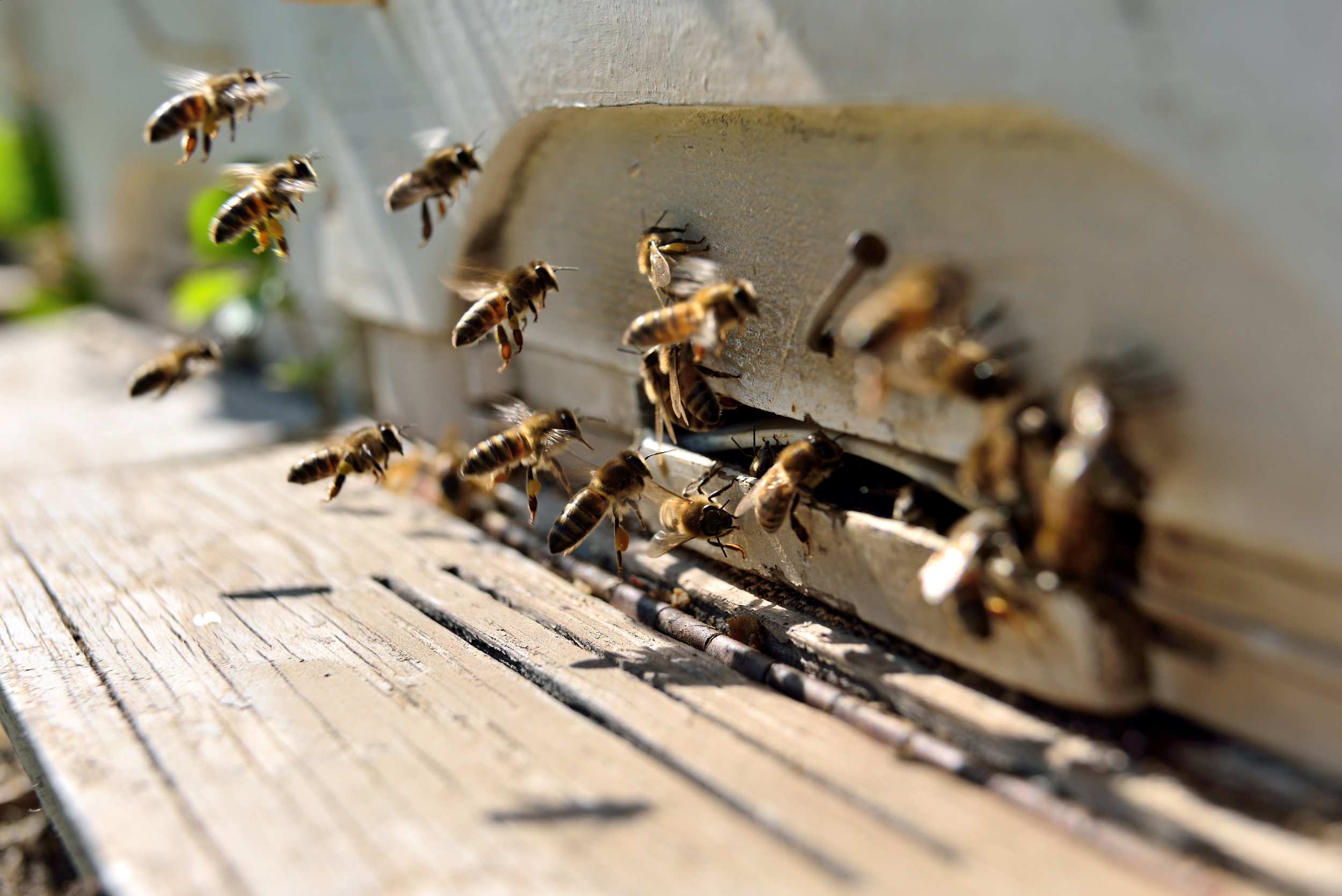 Which Methods Does an Exterminator Use to Eliminate Bees and Wasps in New Jersey?
