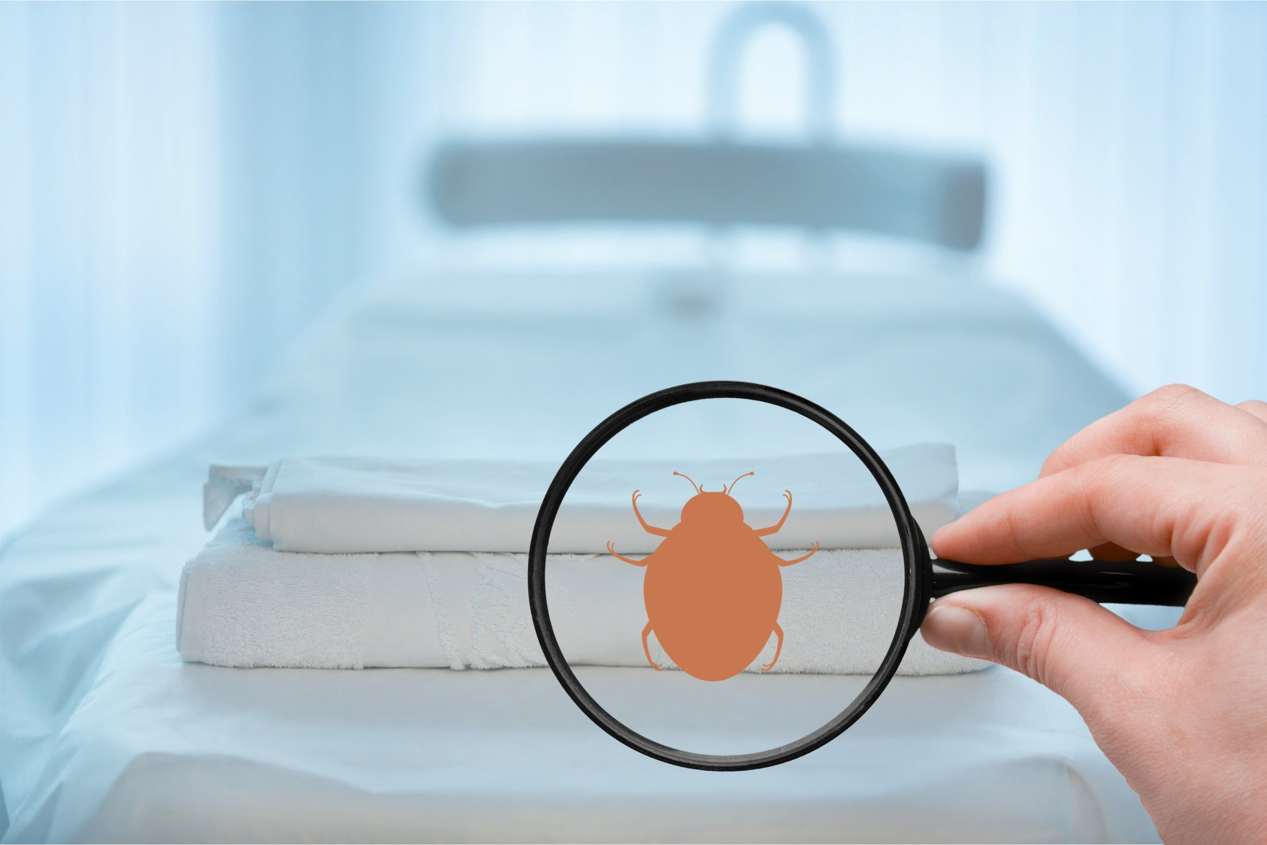 Exterminator's Tips for Identifying Bed Bugs in Queens, NY