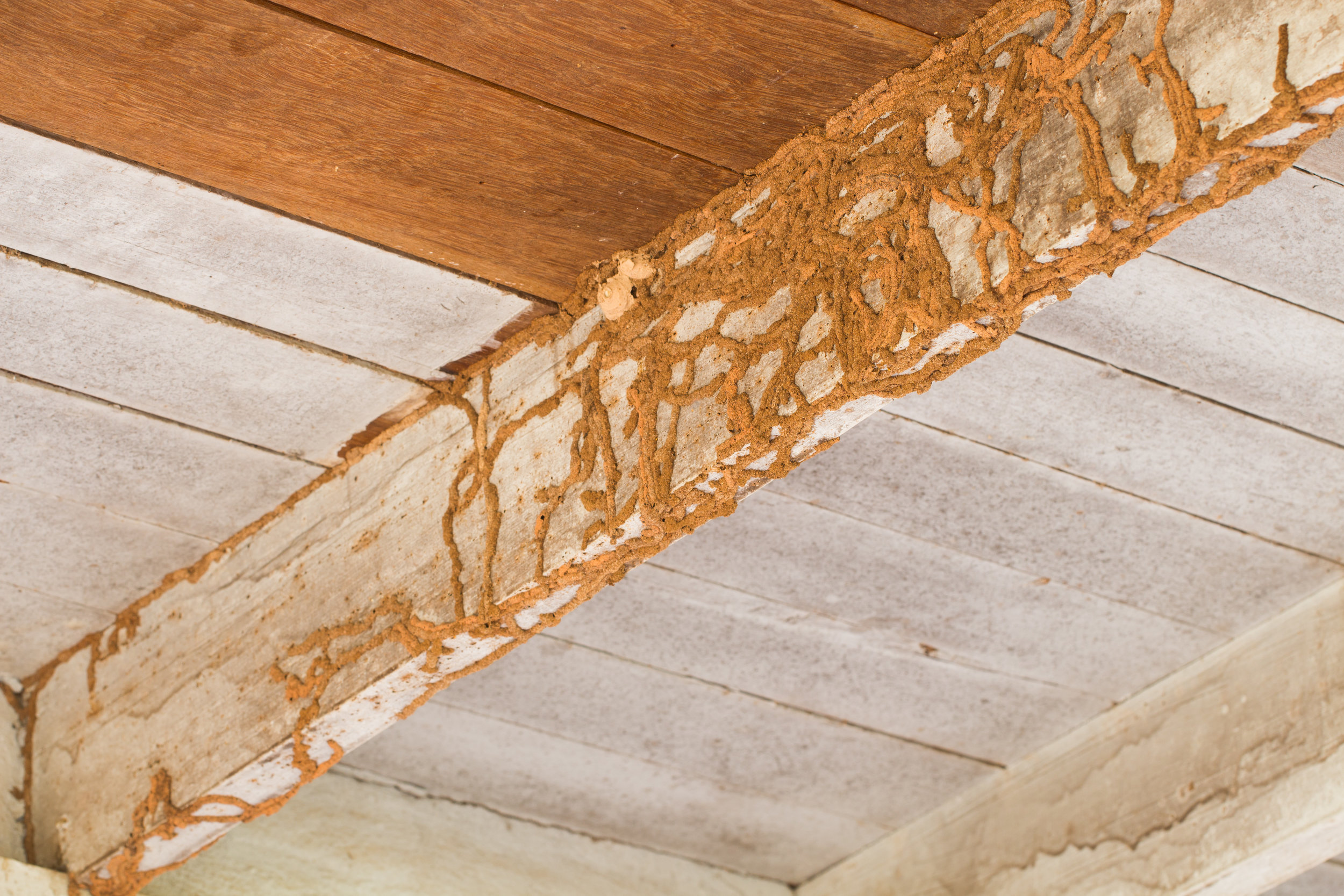 Questions You Need to Ask Before Hiring a Termite Extermination Company in NYC