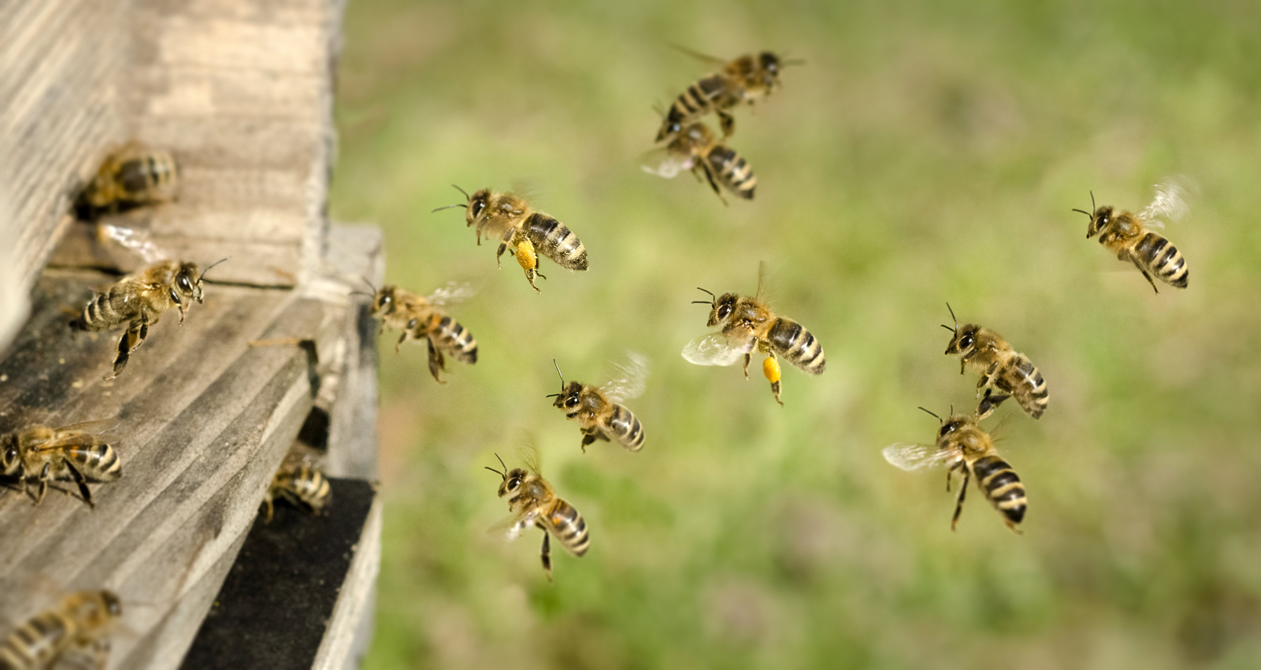 Removing Bees from Your New Jersey House with Professional Pest Control
