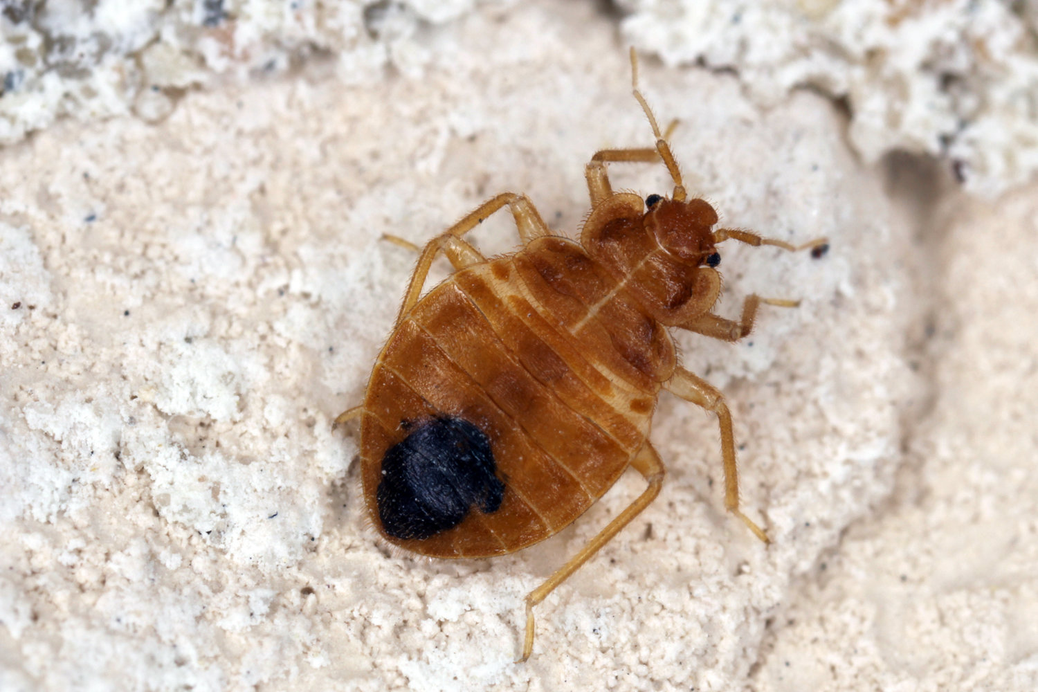 Top bed bug exterminator in Queens, NY