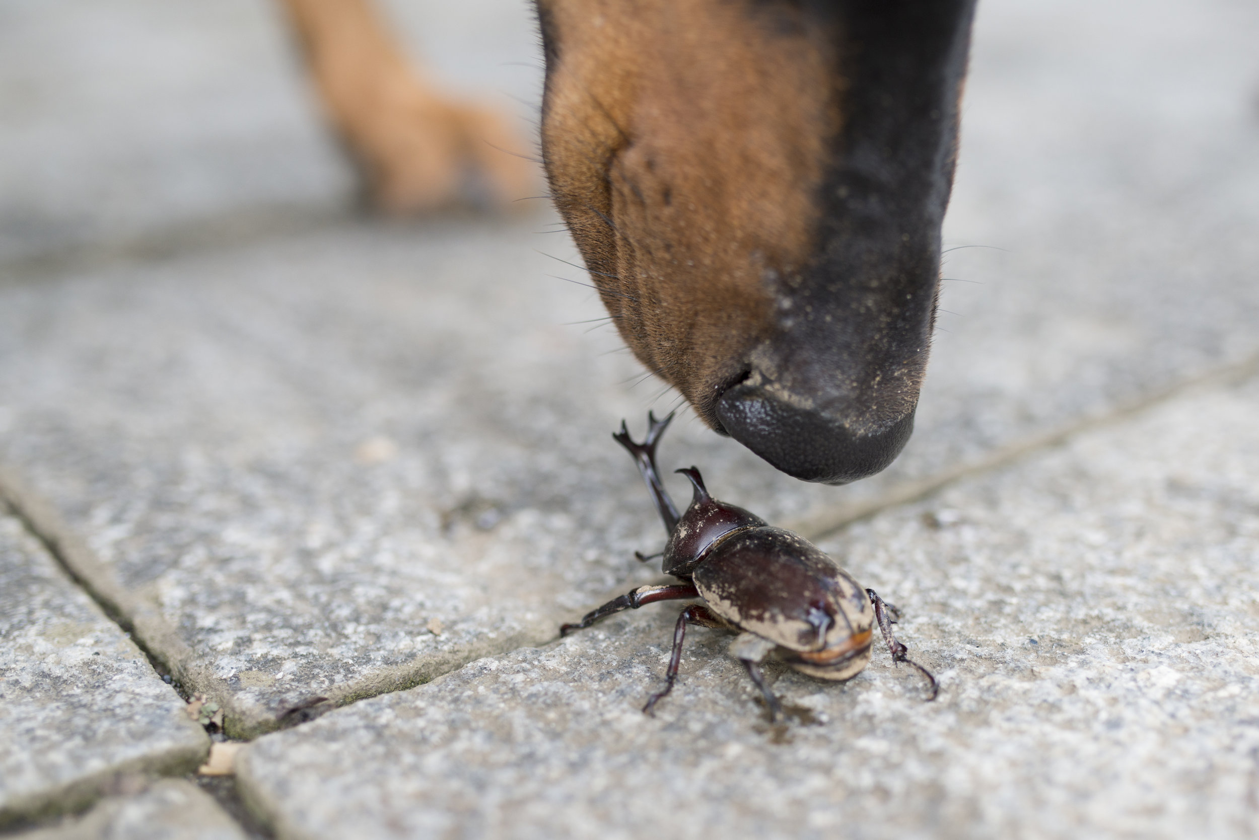 Using K9 Inspections in Nassau County, NY, Commercial Pest Control