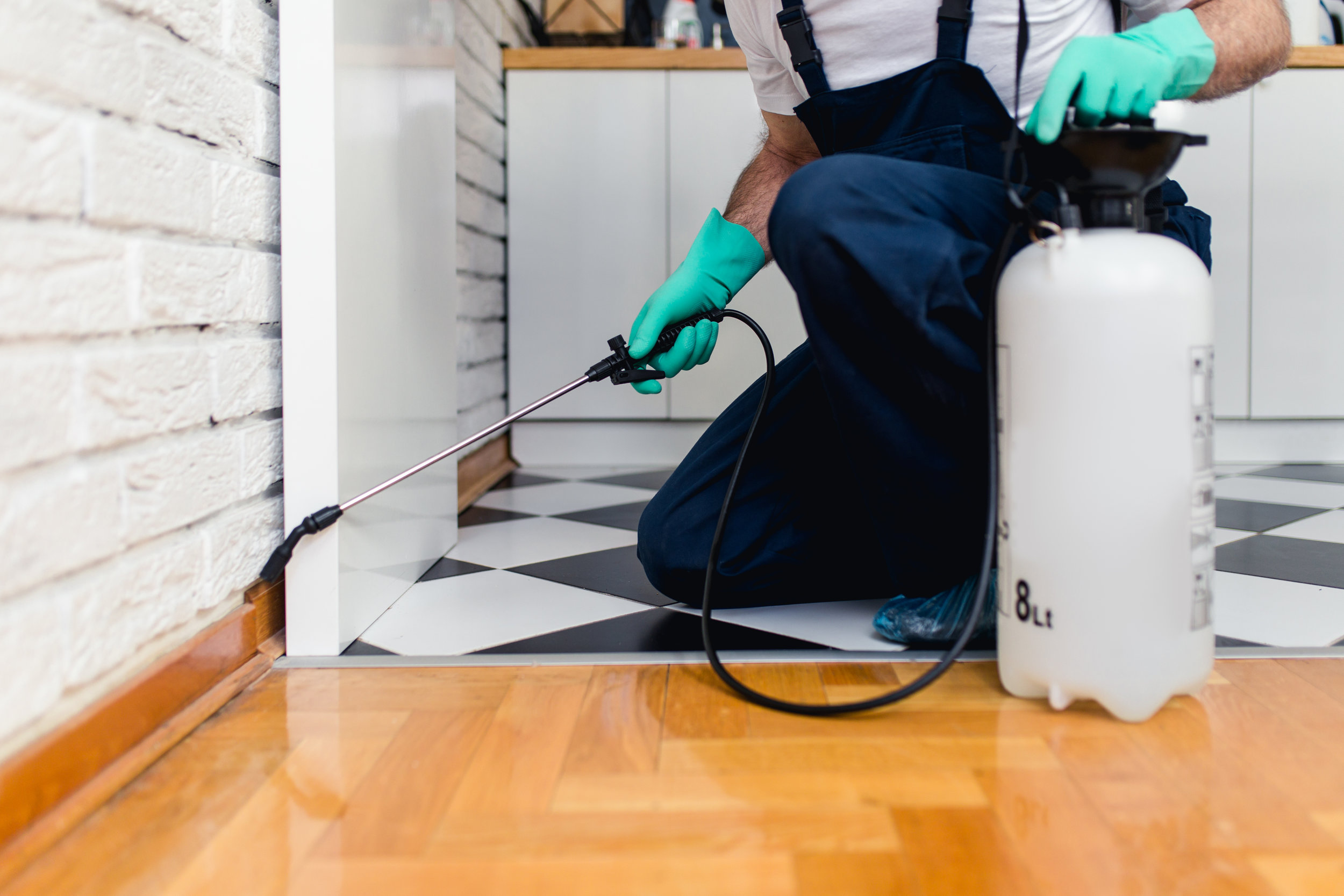 How to Choose a Pest Control Company in Queens, NY
