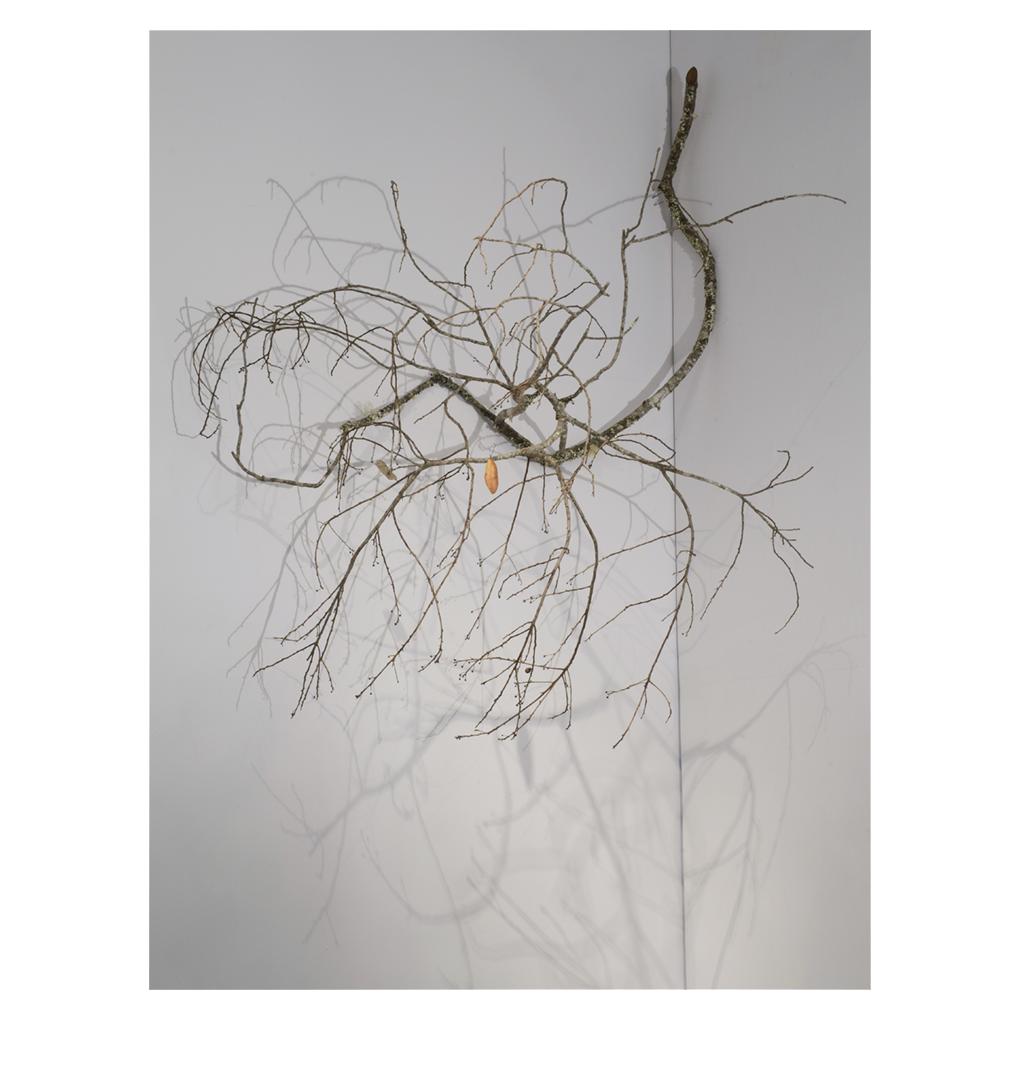 Axis Mundi,  variable, found branch, leaf