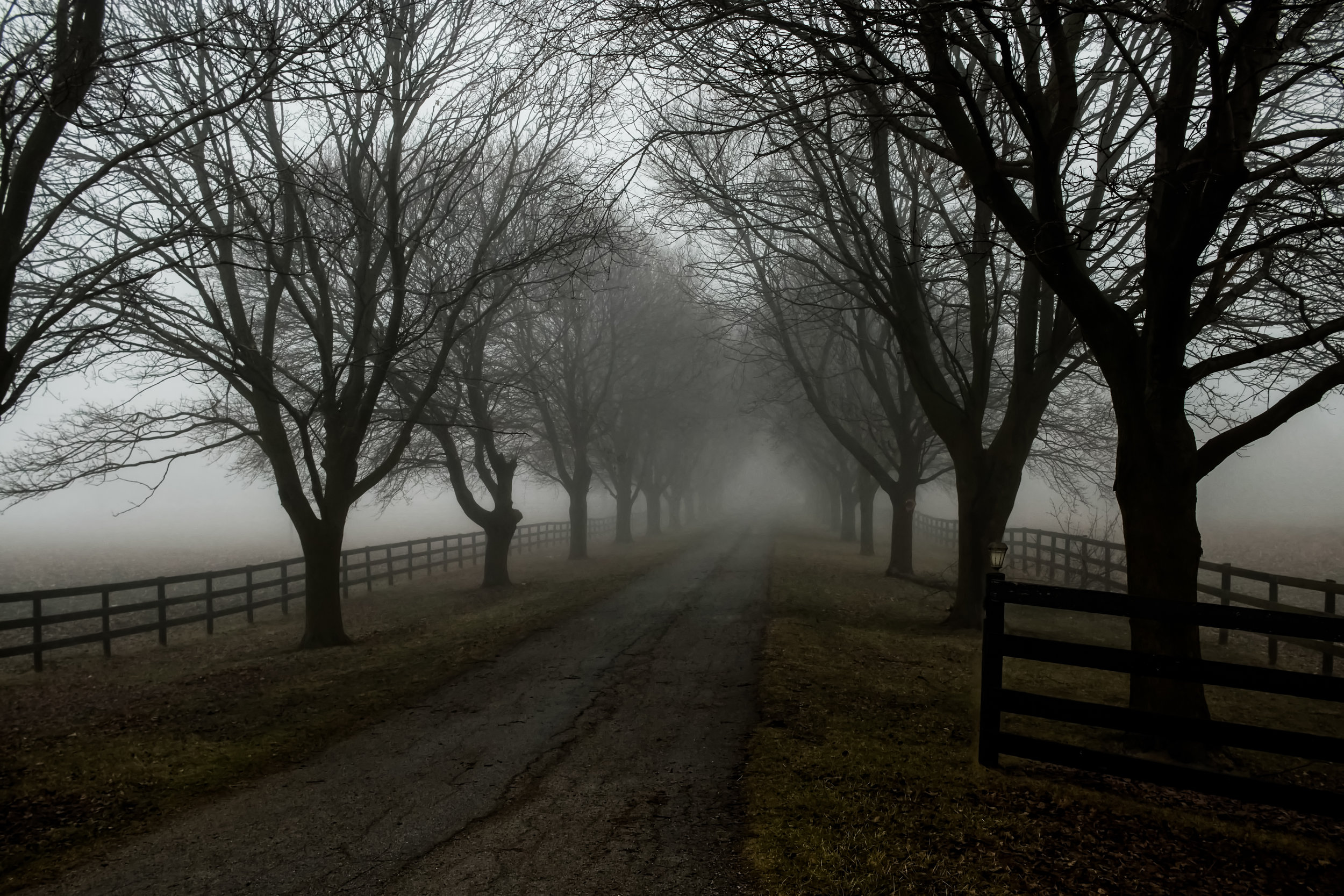 Foggy Lane 2016