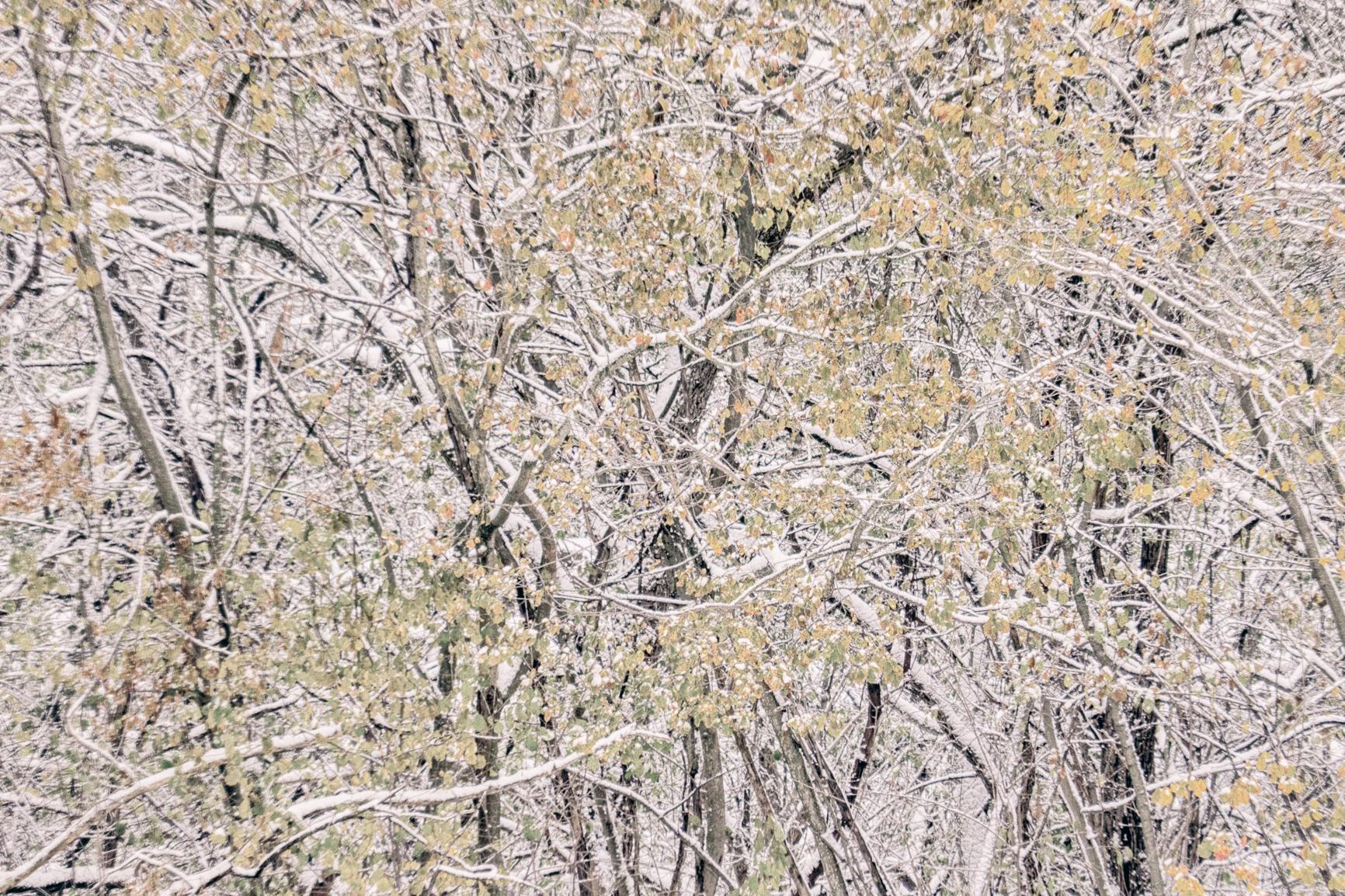 Winter Abstract No. 3