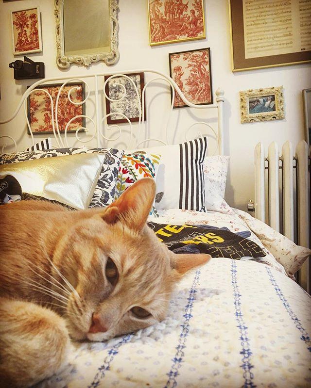I'd say it's a solid 50/50 as to whether or not you should trust this cat. 🐈 . . . . . . . #meow #Jellical #cat #catsofinstagram #RoryCat #toile #cat22  #CuriousAF
