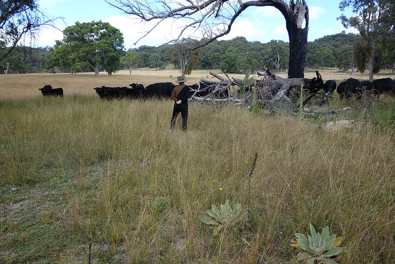 Eloise Lindeback visiting one of the paddocks at Tim Wright's farm Lana.