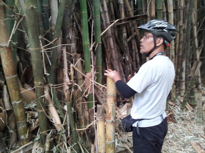 Sinngih-bamboo.png