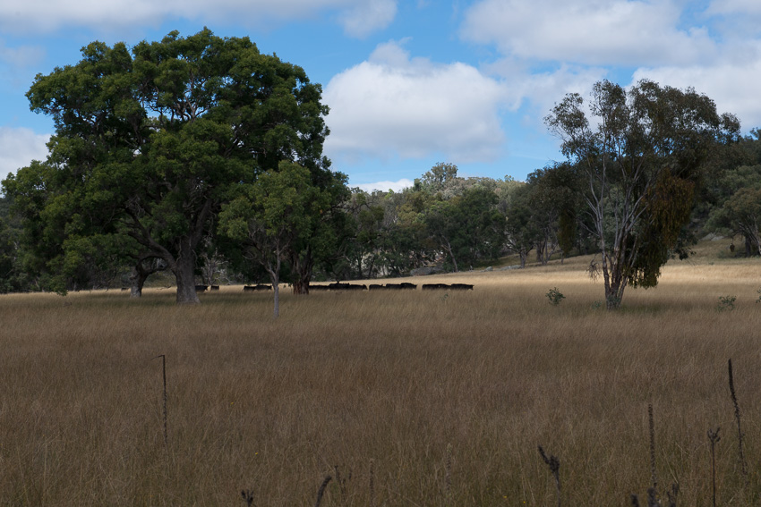 Tim Wright's impressively healthy grasslands produced through holistic management practices on Lana NSW