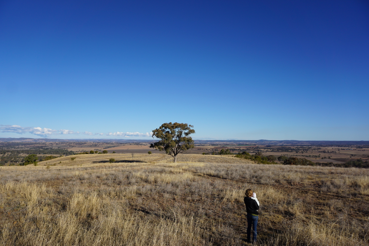 From the highest point at Billabong farm. The story glimpsed in this image is that Billabong retains full grass cover during the drought, whereas in many of the farms in the distance we're seeing raw earth.