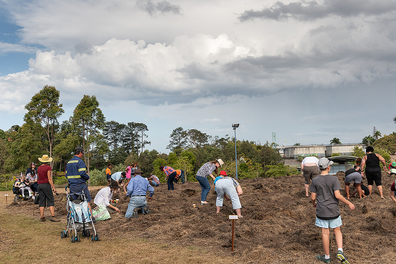 Community planting sunflowers at the Beacon in August 2018