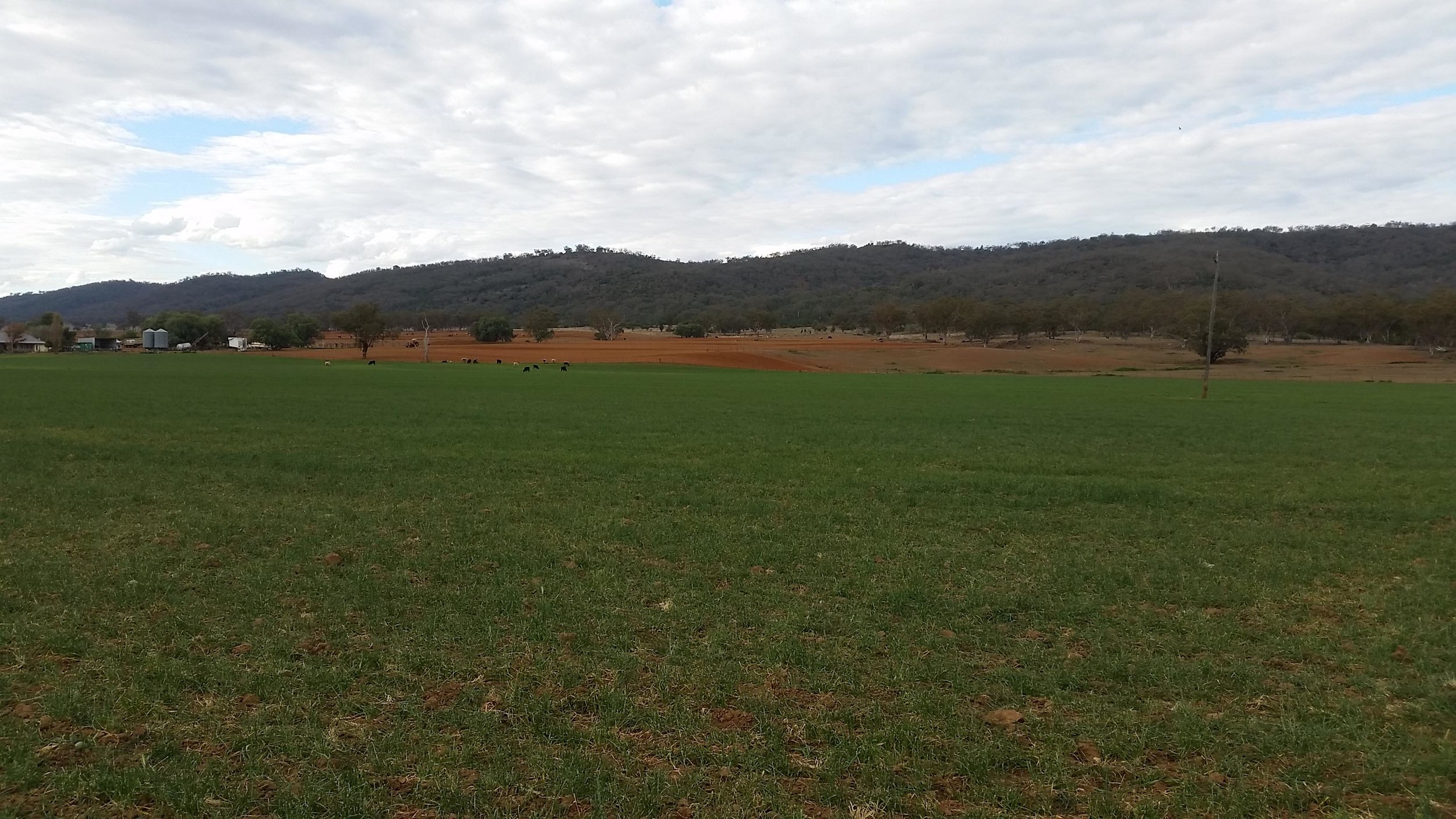An irrigated patch with red paddock behind.