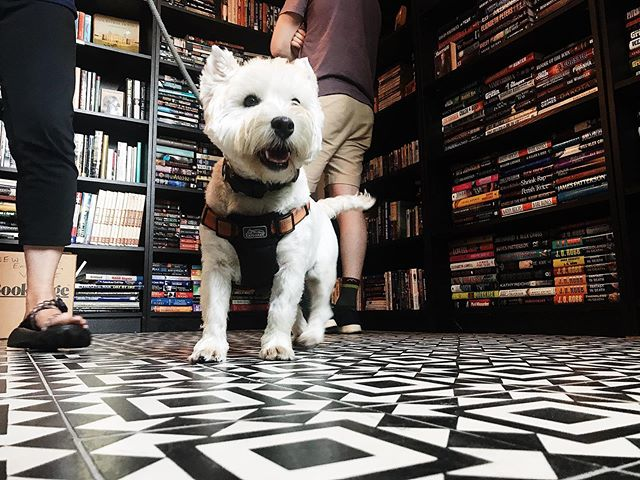 We're excited to be back in the store tomorrow! Don't forget we always love to meet your furry friends 🐐💕🐶 • • • #dogsofinstagram #bookstoredog #nulu #shoplocal #shopsmall #indiebookstore #nannygoat #bookworm