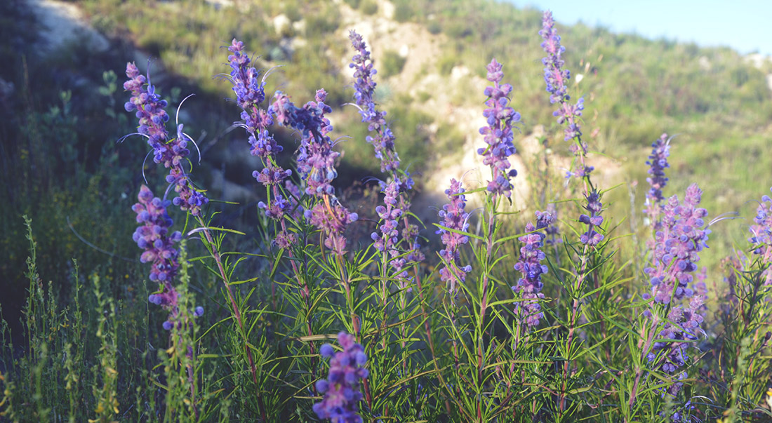 We expect to see an incredible display of wildflowers!