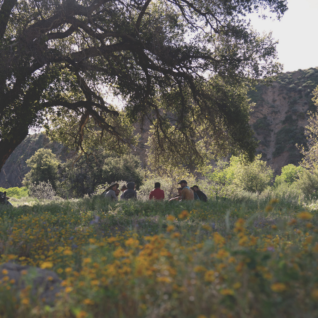 oaks-and-acorns-ojai-sm.jpg