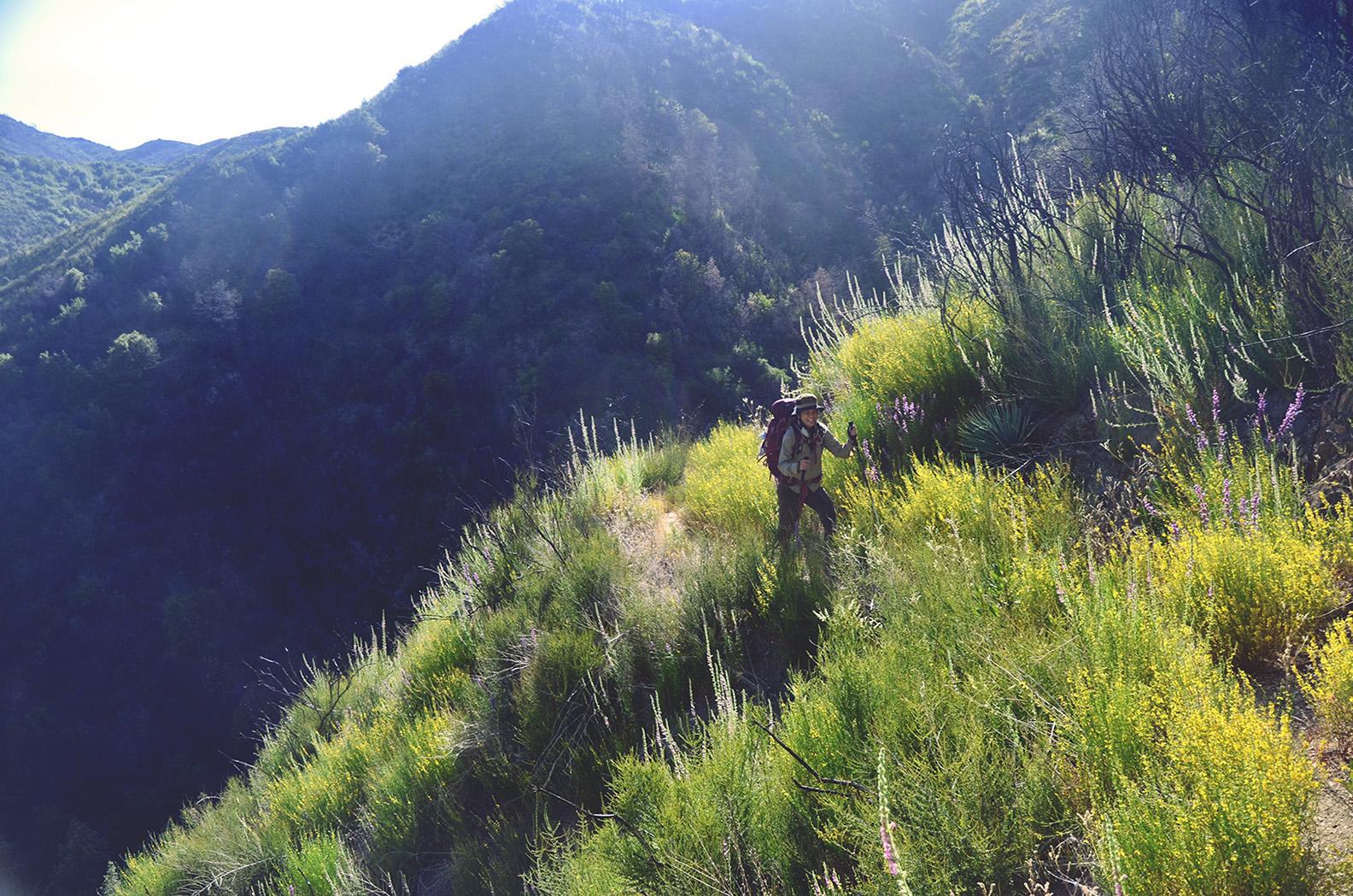 wild-dharma-hiker.jpg