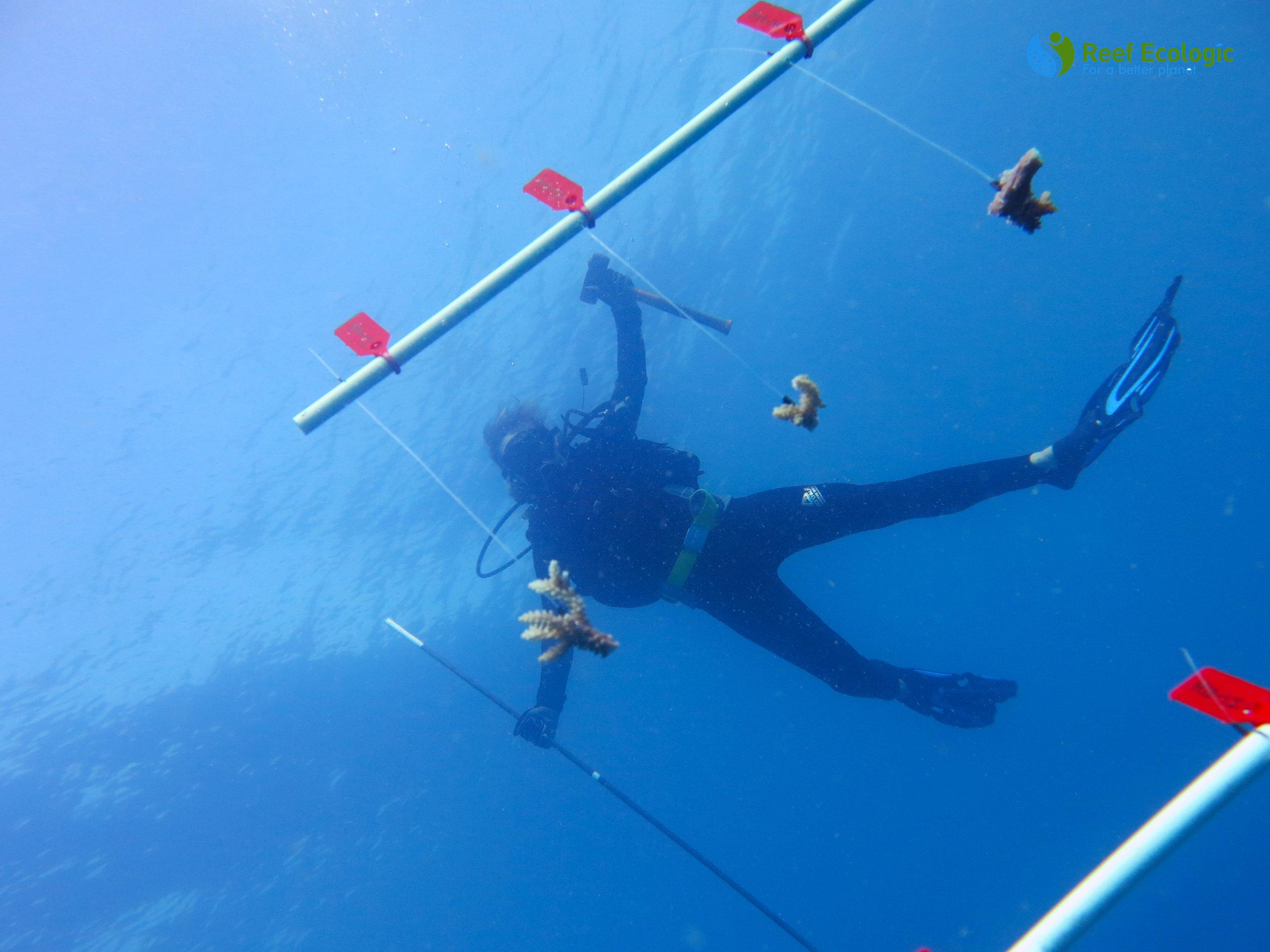 Copy of Volunteer-underwater-with-a-tree.JPG